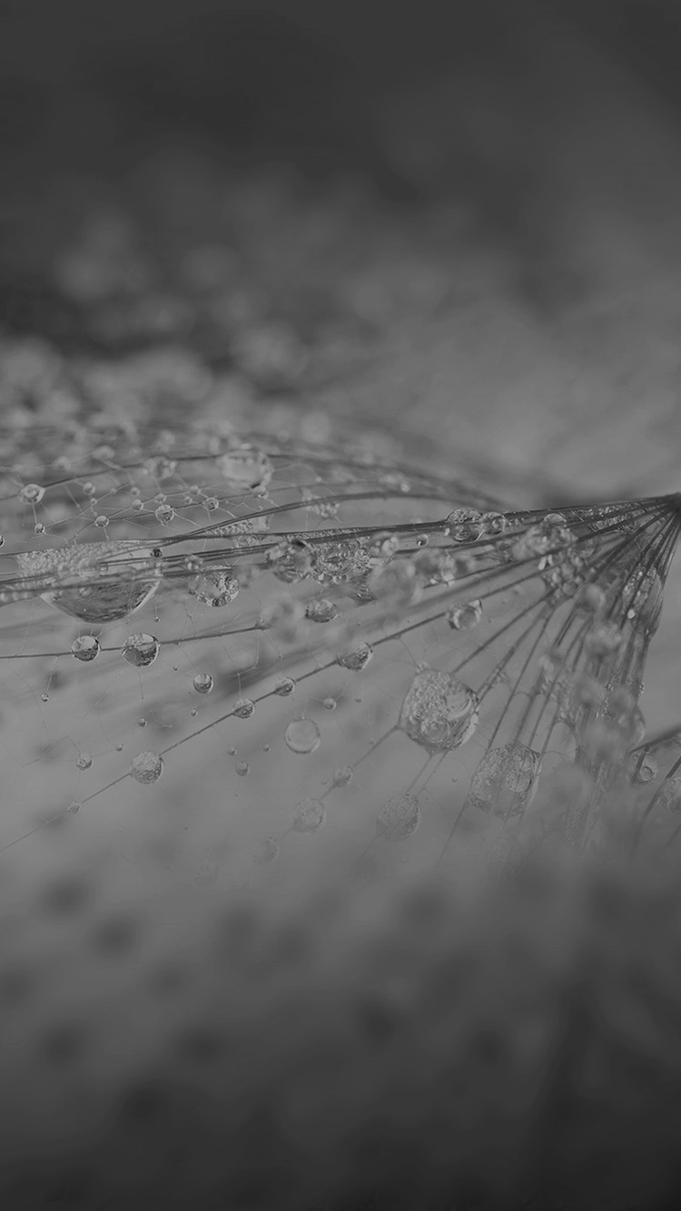 iPhone7papers.com-Apple-iPhone7-iphone7plus-wallpaper-vj74-nature-rain-drop-flower-dark-bw-pattern