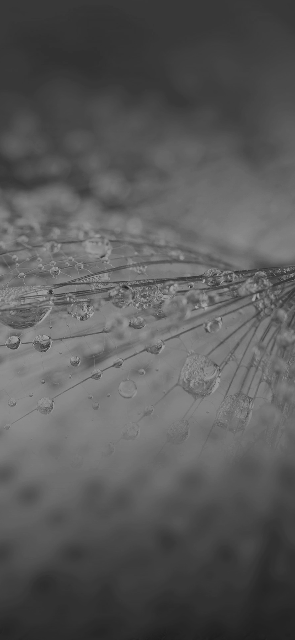 iPhoneXpapers.com-Apple-iPhone-wallpaper-vj74-nature-rain-drop-flower-dark-bw-pattern