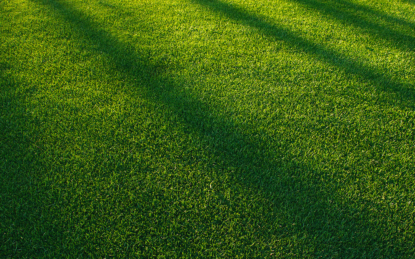 The American Lawn – Our Obsession with Turf Grass