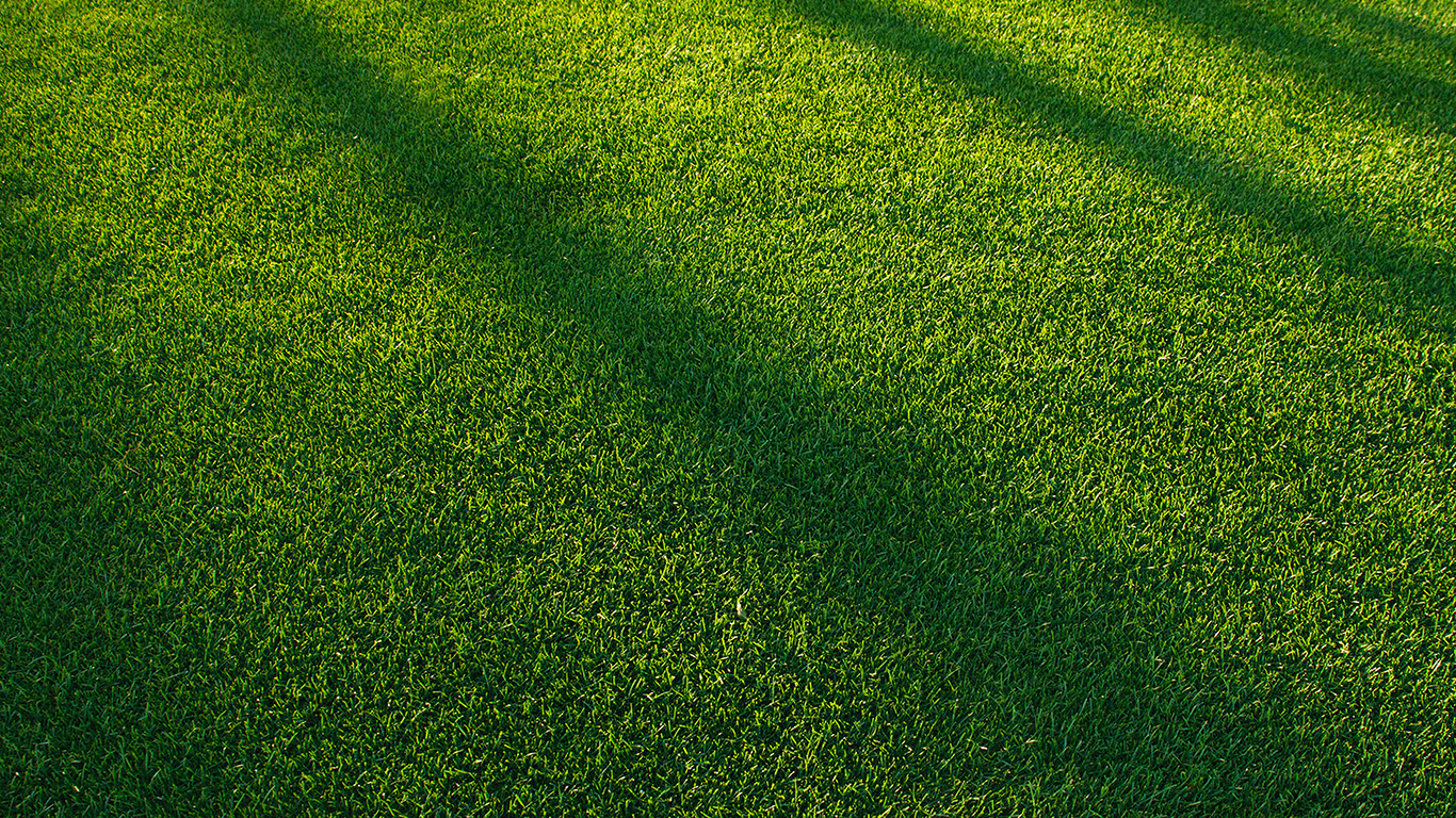 vj85-lawn-grass-sunlight-green-pattern - Papers.co