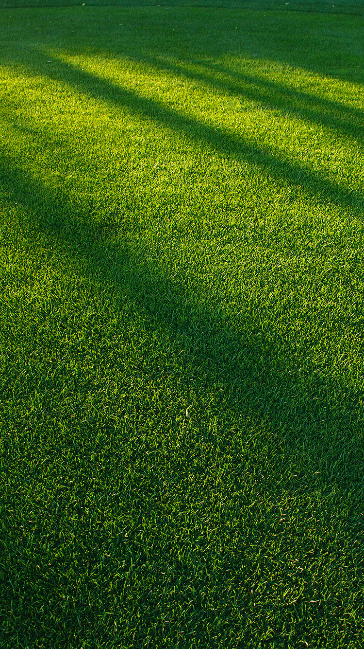 iPhone7papers.com-Apple-iPhone7-iphone7plus-wallpaper-vj85-lawn-grass-sunlight-green-pattern