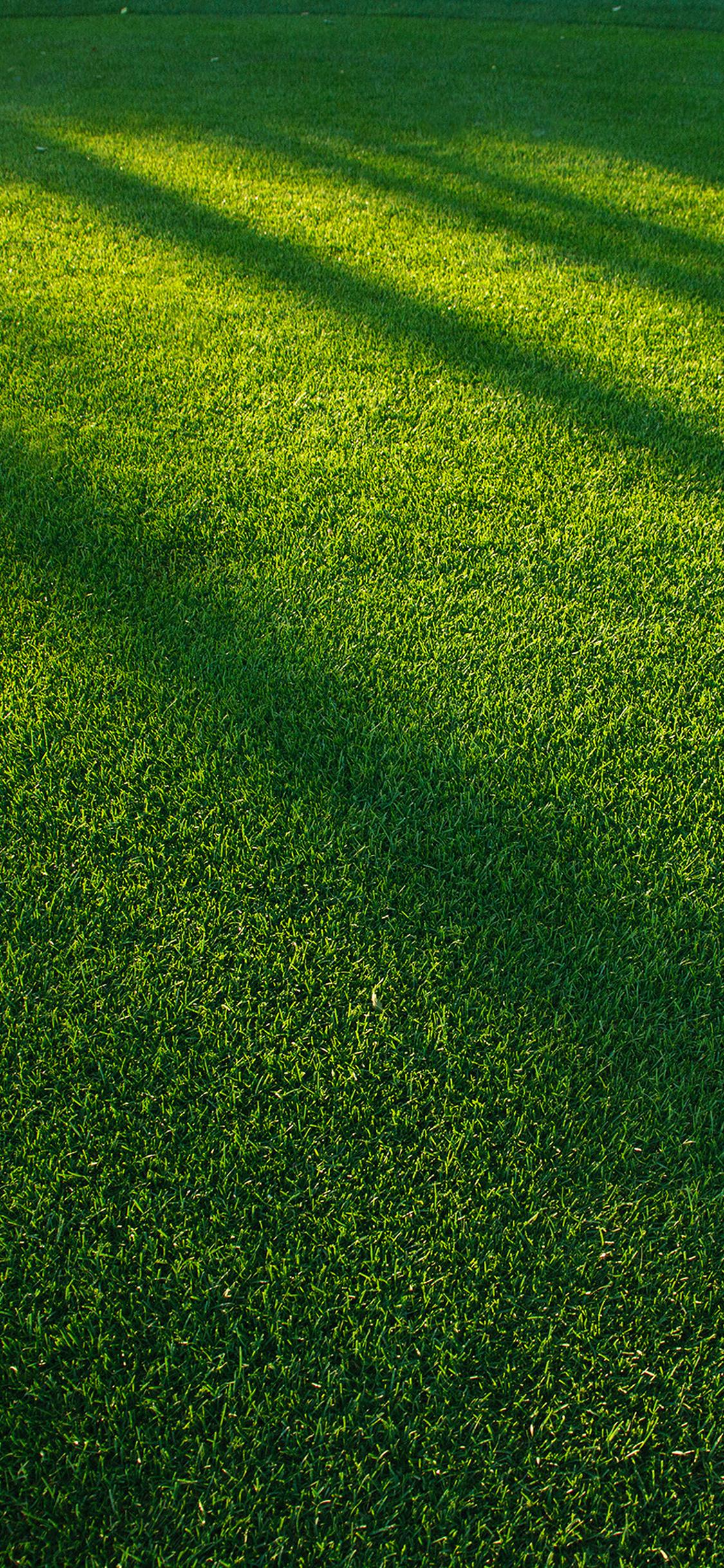 iPhoneXpapers.com-Apple-iPhone-wallpaper-vj85-lawn-grass-sunlight-green-pattern