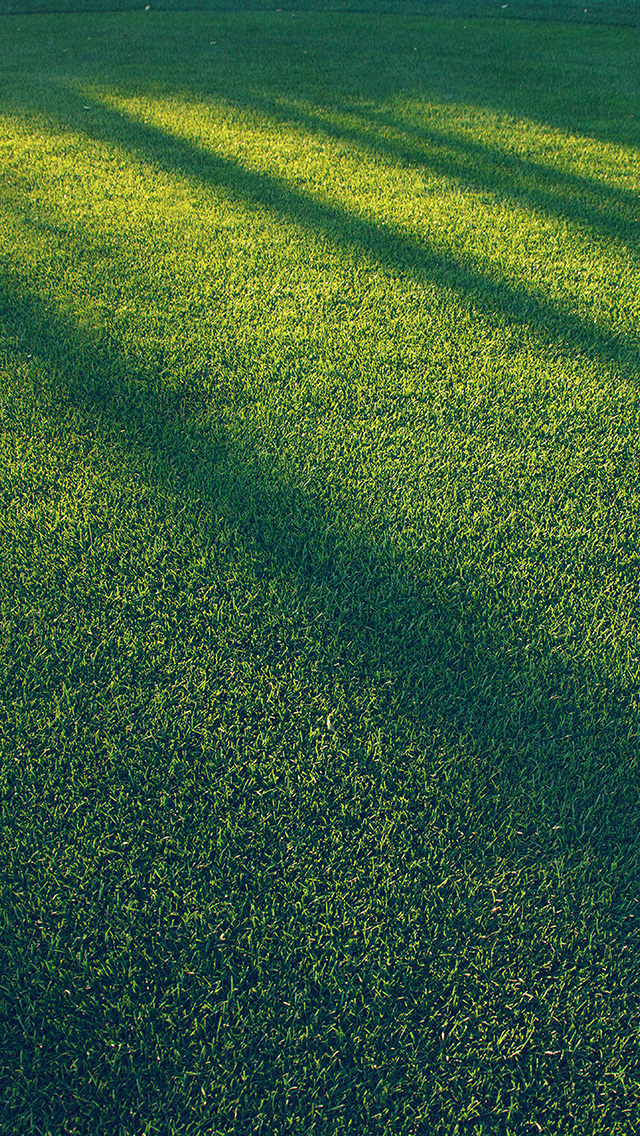 freeios8.com-iphone-4-5-6-plus-ipad-ios8-vj86-lawn-grass-sunlight-green-blue-pattern