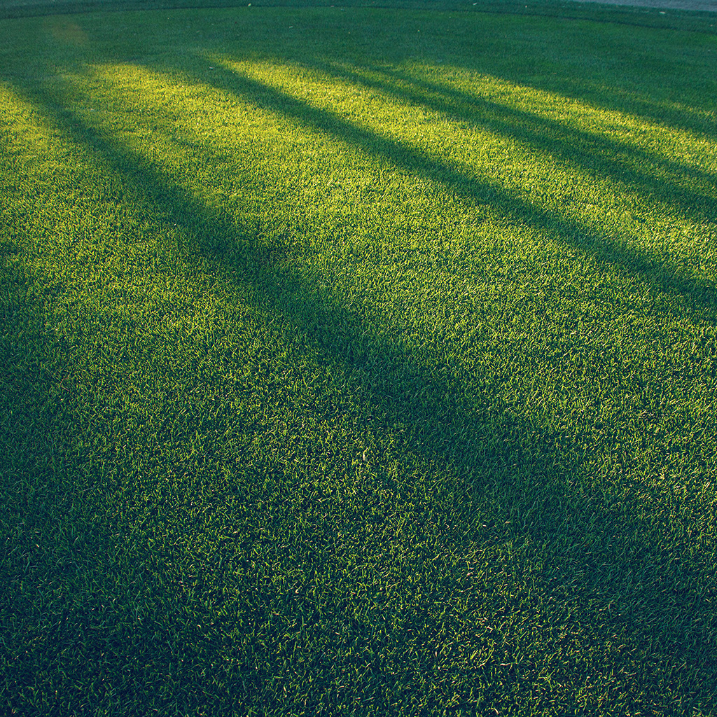 wallpaper-vj86-lawn-grass-sunlight-green-blue-pattern-wallpaper