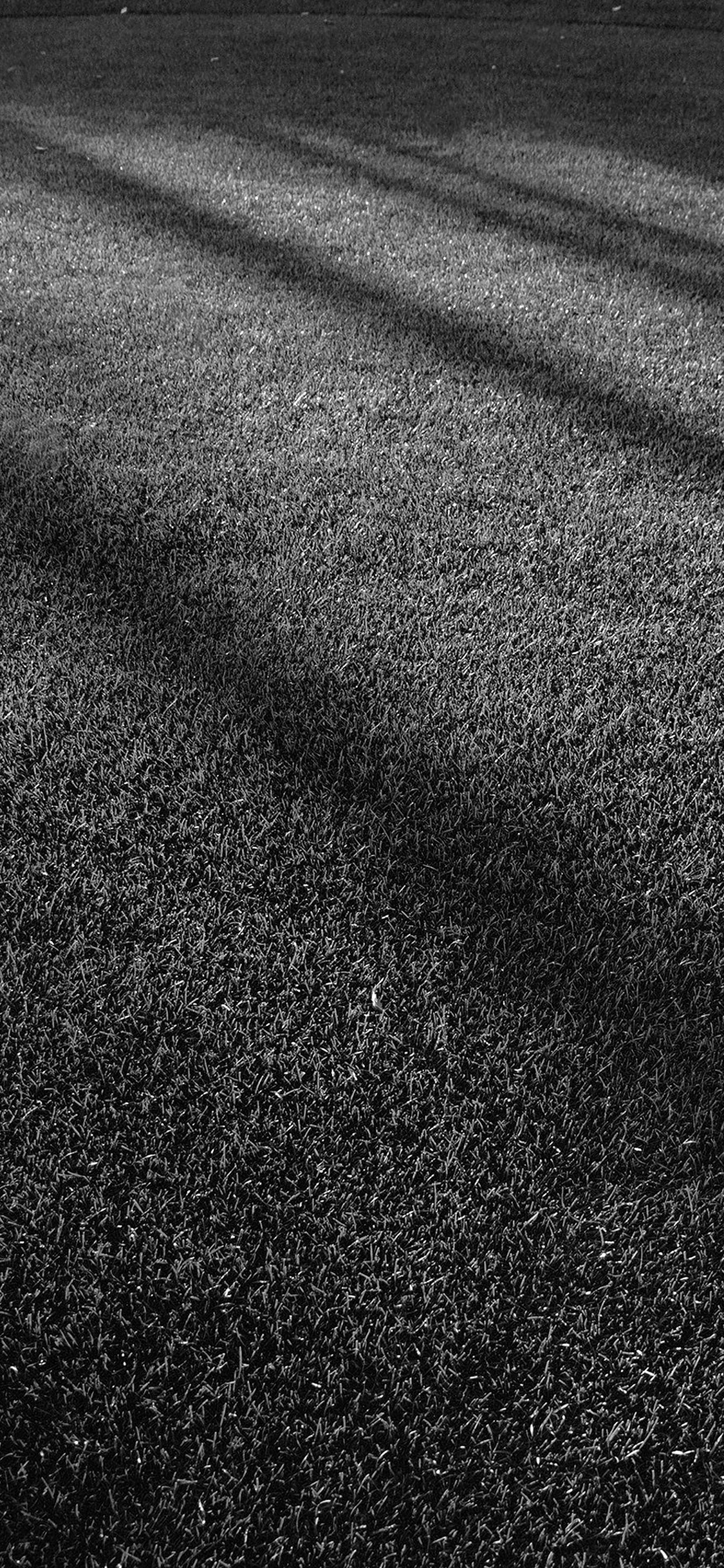 iPhoneXpapers.com-Apple-iPhone-wallpaper-vj87-lawn-grass-sunlight-green-dark-bw-pattern