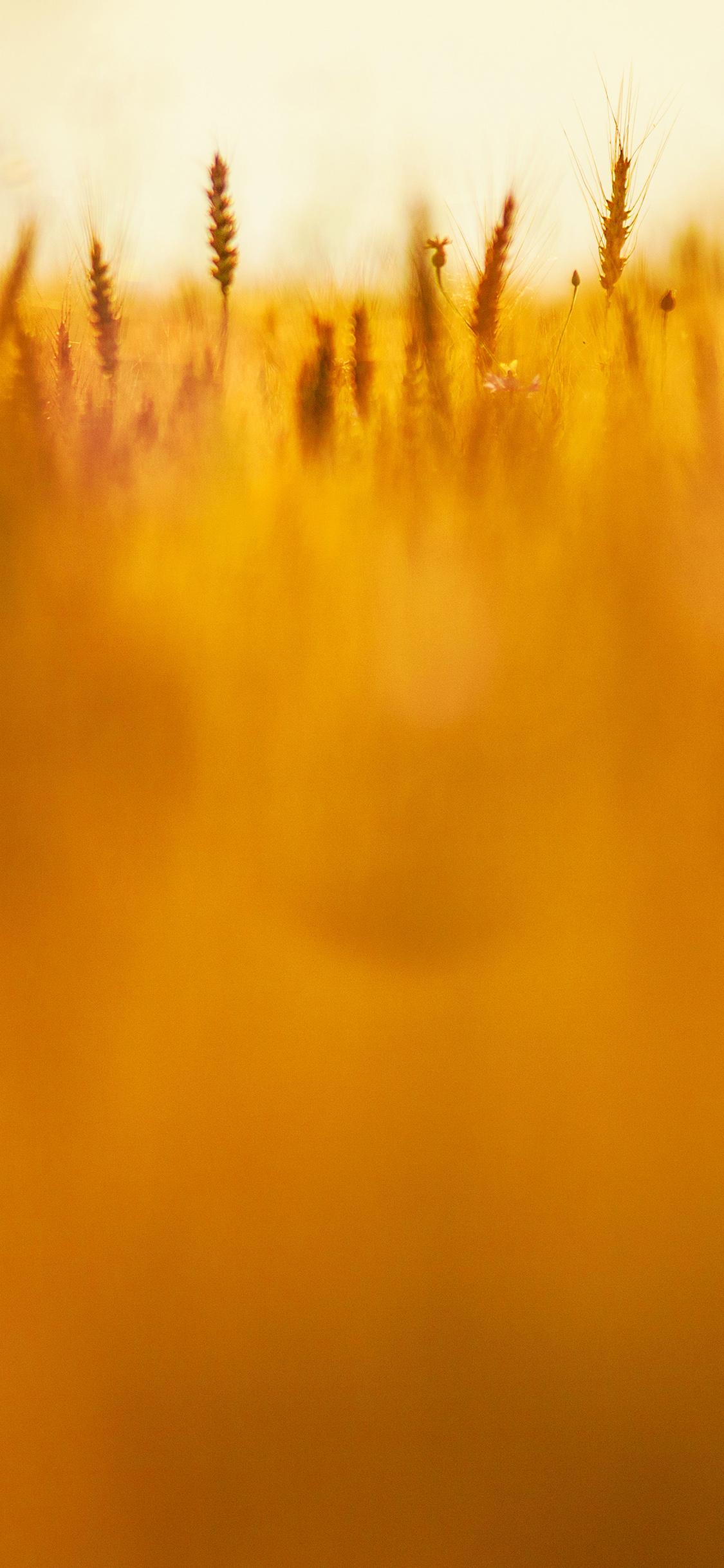 iPhoneXpapers.com-Apple-iPhone-wallpaper-vj89-grass-field-nature-orange-red-pattern