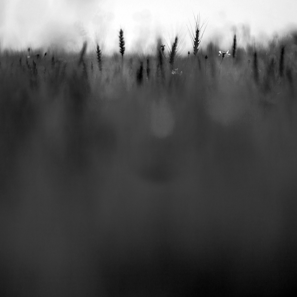 wallpaper-vj91-grass-field-nature-dark-pattern-wallpaper