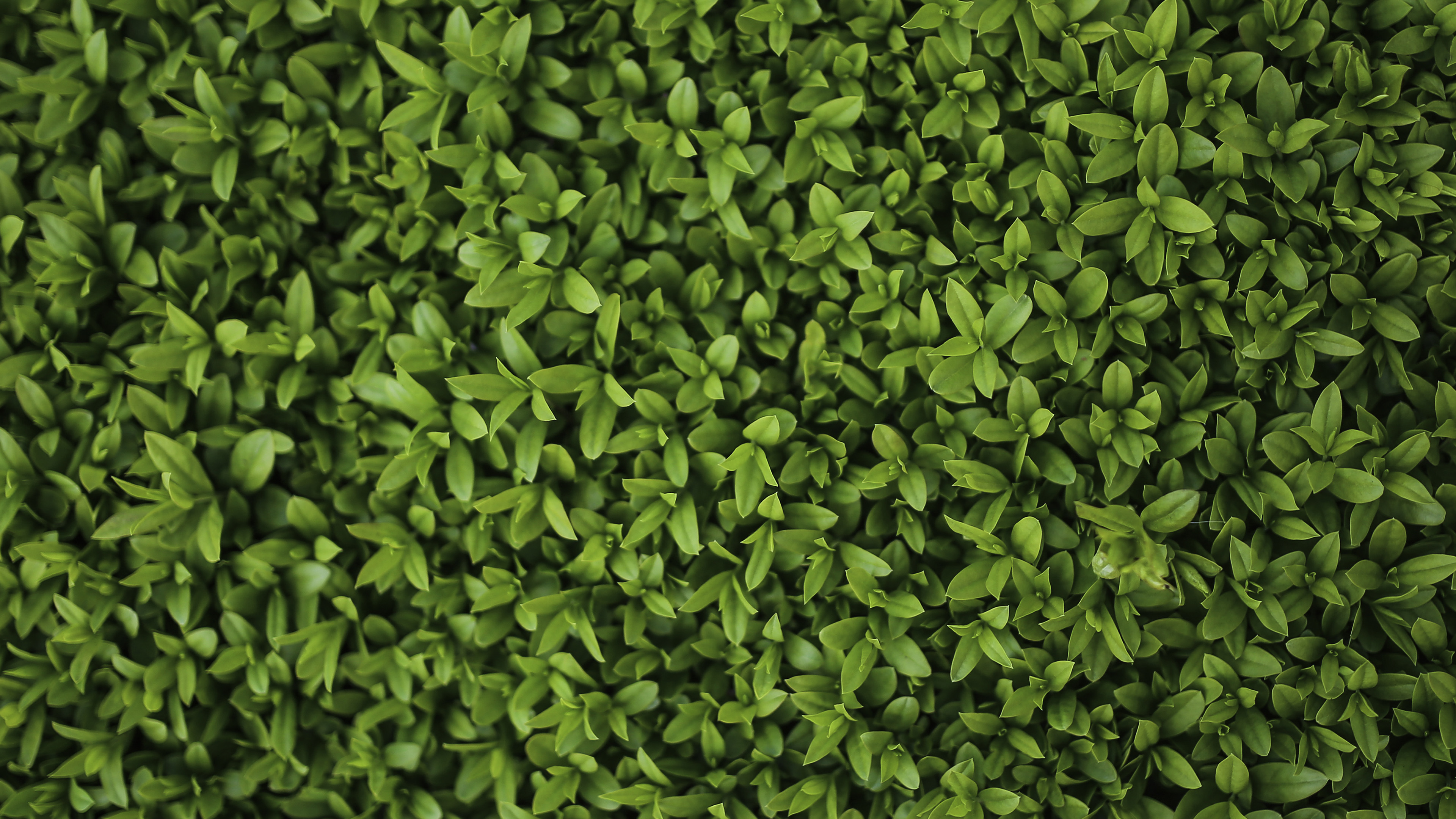 vk70-nature-green-leaf-grass-garden-flower-pattern - Papers.co
