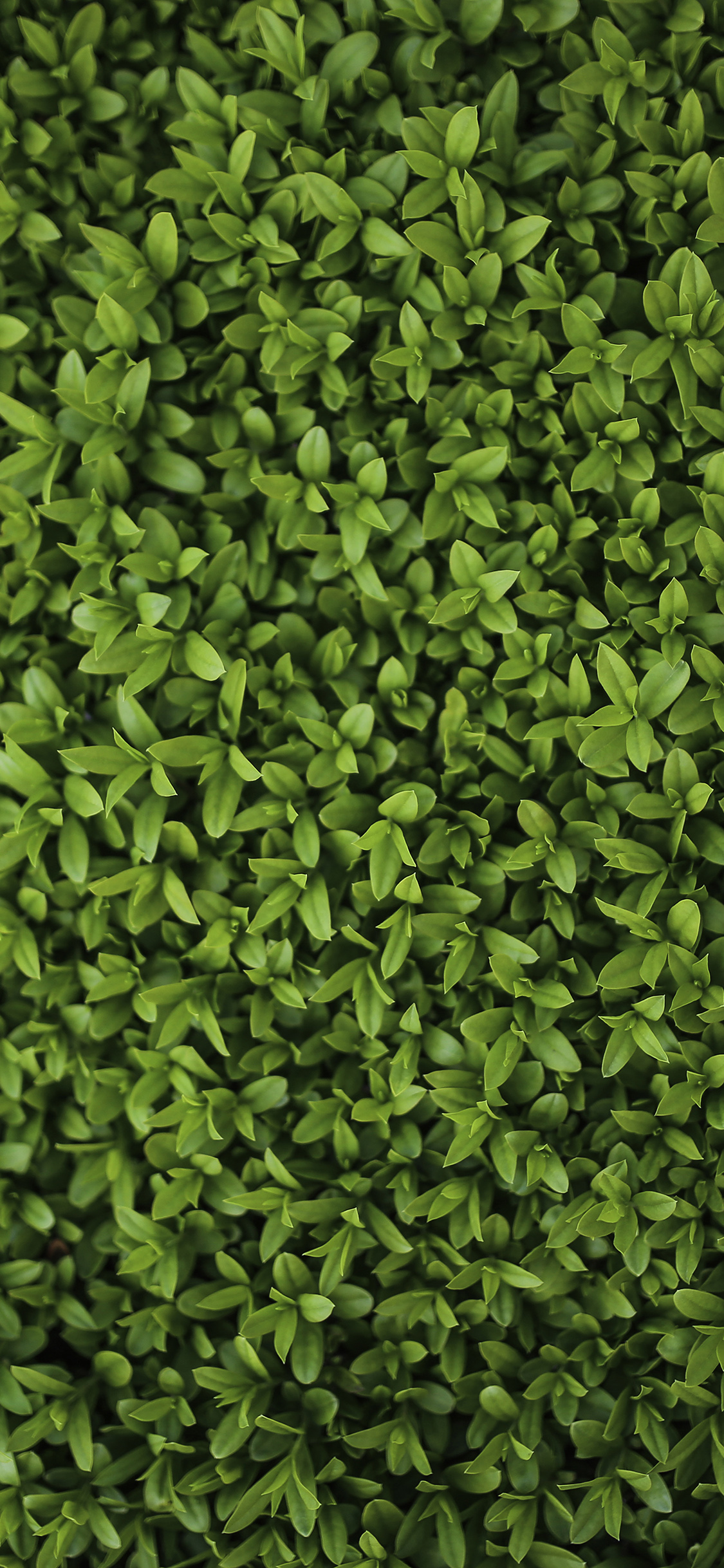 Vk70 Nature Green Leaf Grass Garden Flower Pattern
