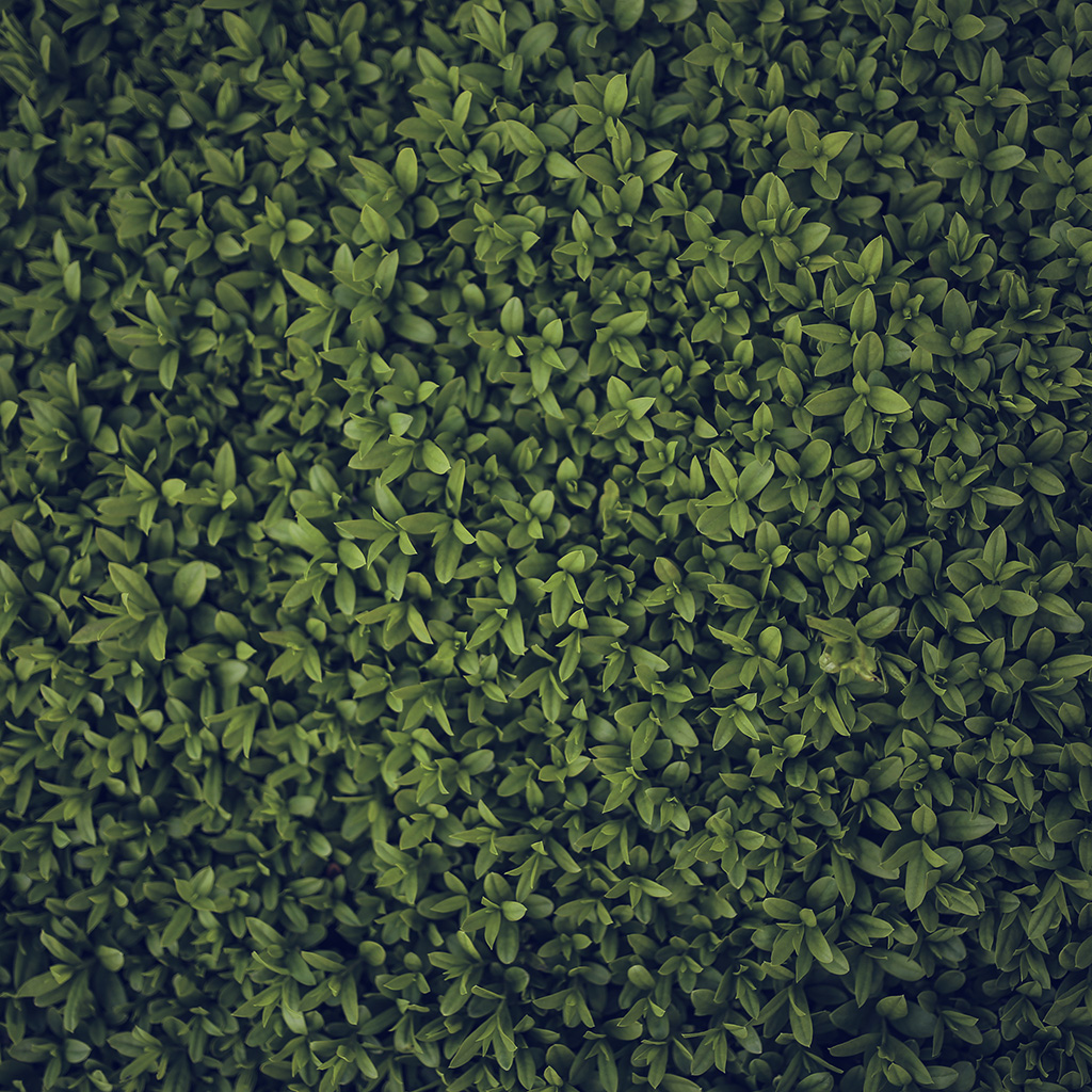 wallpaper-vk72-nature-blue-green-leaf-grass-garden-flower-pattern-wallpaper