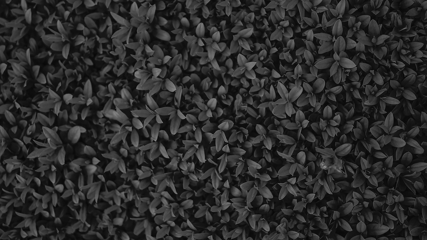 desktop-wallpaper-laptop-mac-macbook-air-vk74-nature-dark-bw-leaf-grass-garden-flower-pattern-wallpaper