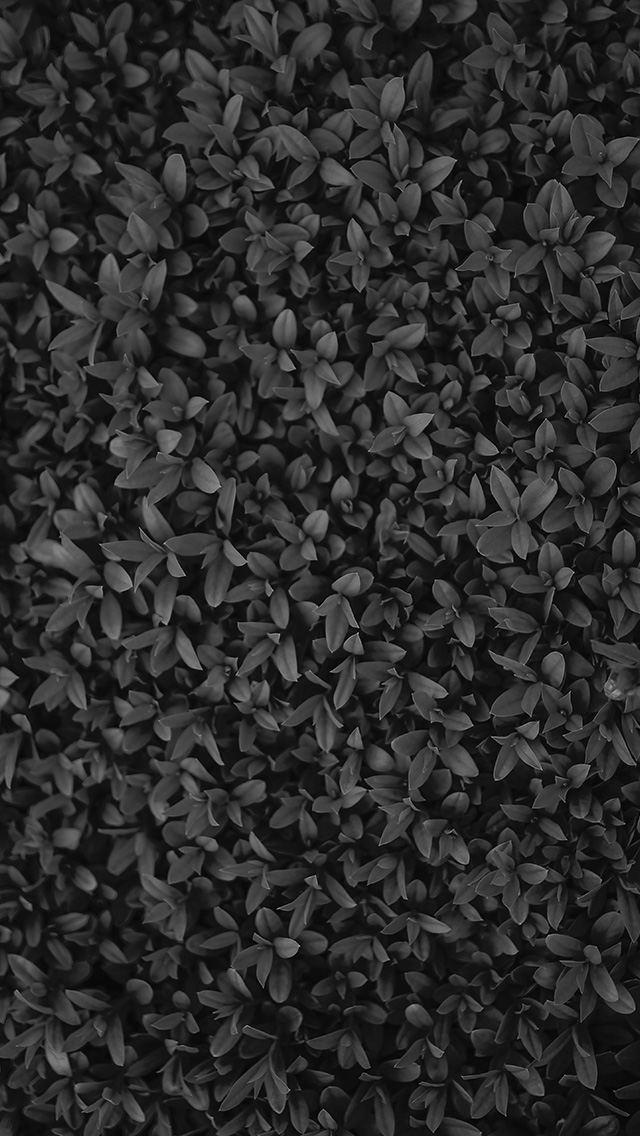 freeios8.com-iphone-4-5-6-plus-ipad-ios8-vk74-nature-dark-bw-leaf-grass-garden-flower-pattern