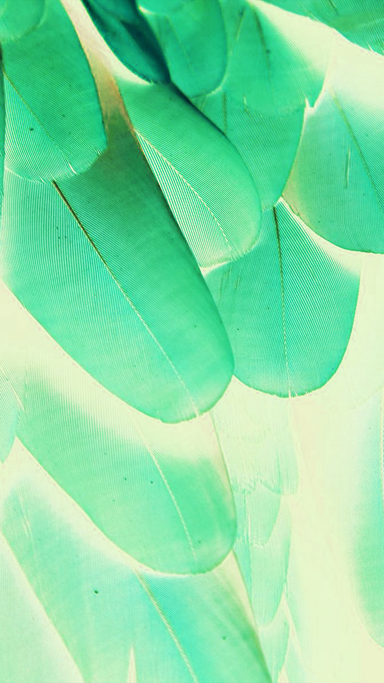 iPhone6papers.co-Apple-iPhone-6-iphone6-plus-wallpaper-vl64-meizu-feathre-green-blue-nature-texture-animal-pattern