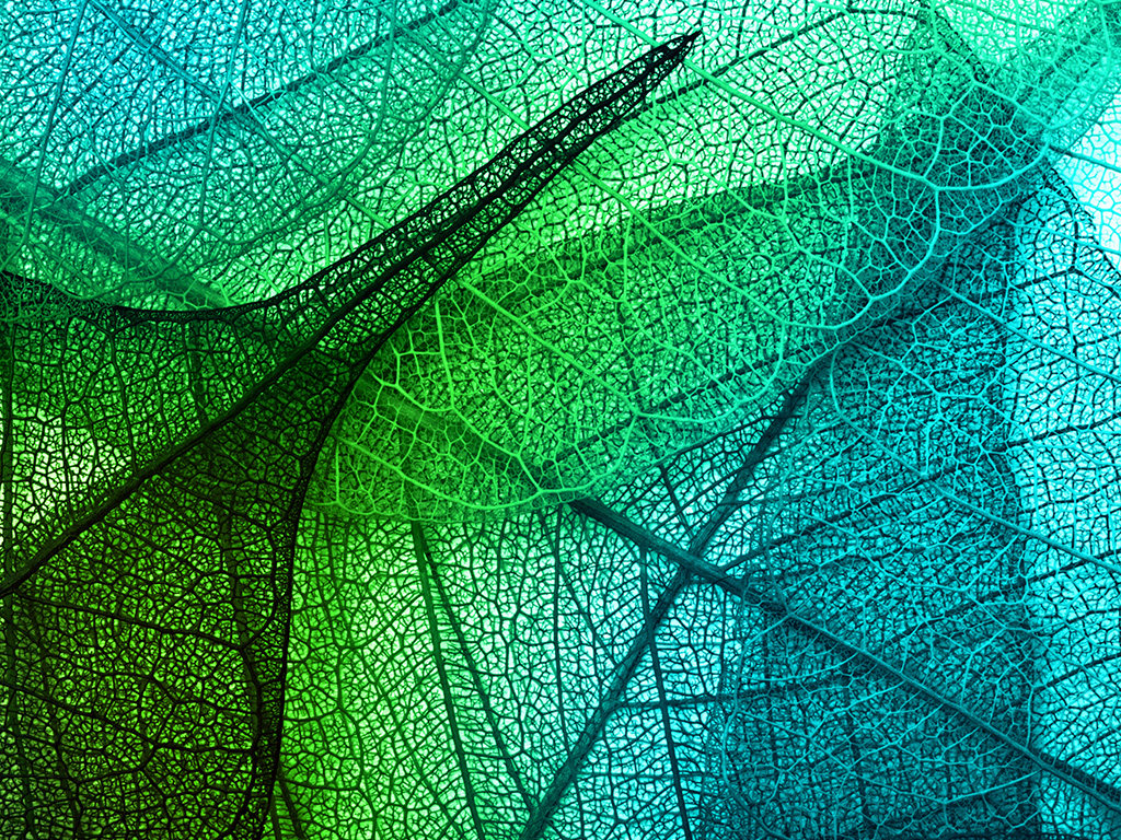 vm02-leaves-art-green-blue-pattern - Papers.co