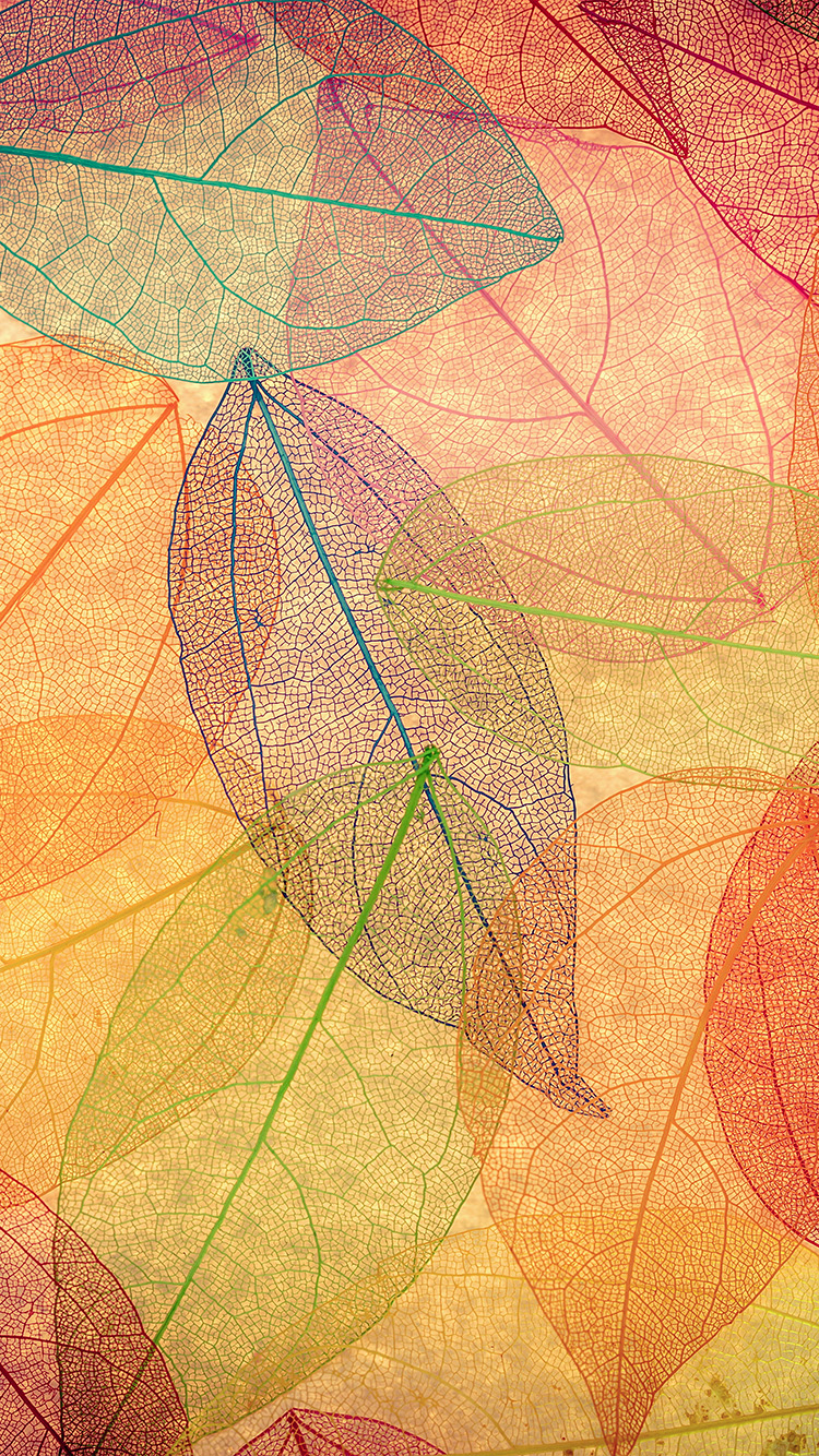 iPhone6papers.co-Apple-iPhone-6-iphone6-plus-wallpaper-vm23-rainbow-color-leaf-art-fall-nature-pattern