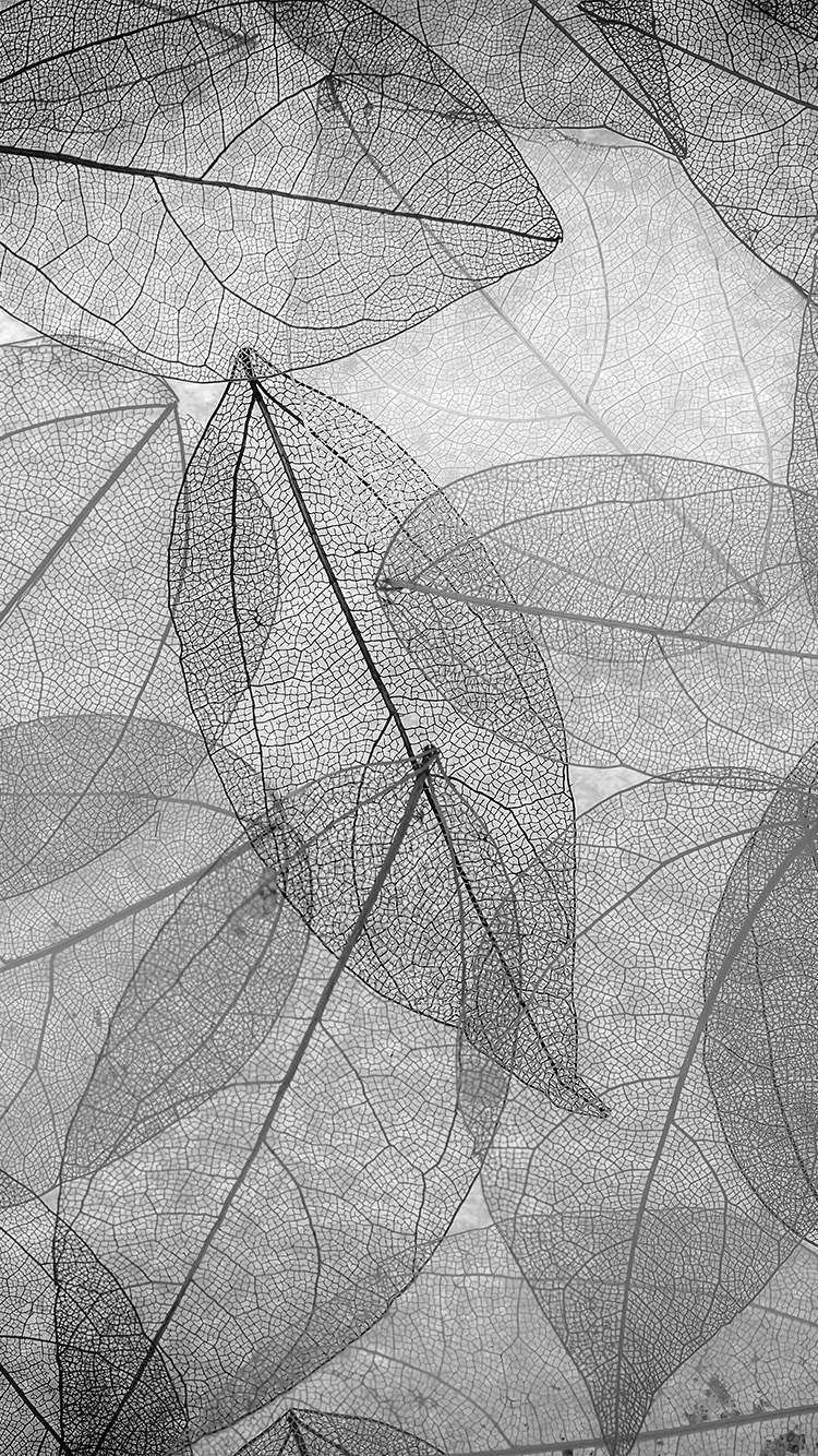 iPhone6papers.co-Apple-iPhone-6-iphone6-plus-wallpaper-vm25-dark-bw-leaf-art-fall-nature-pattern