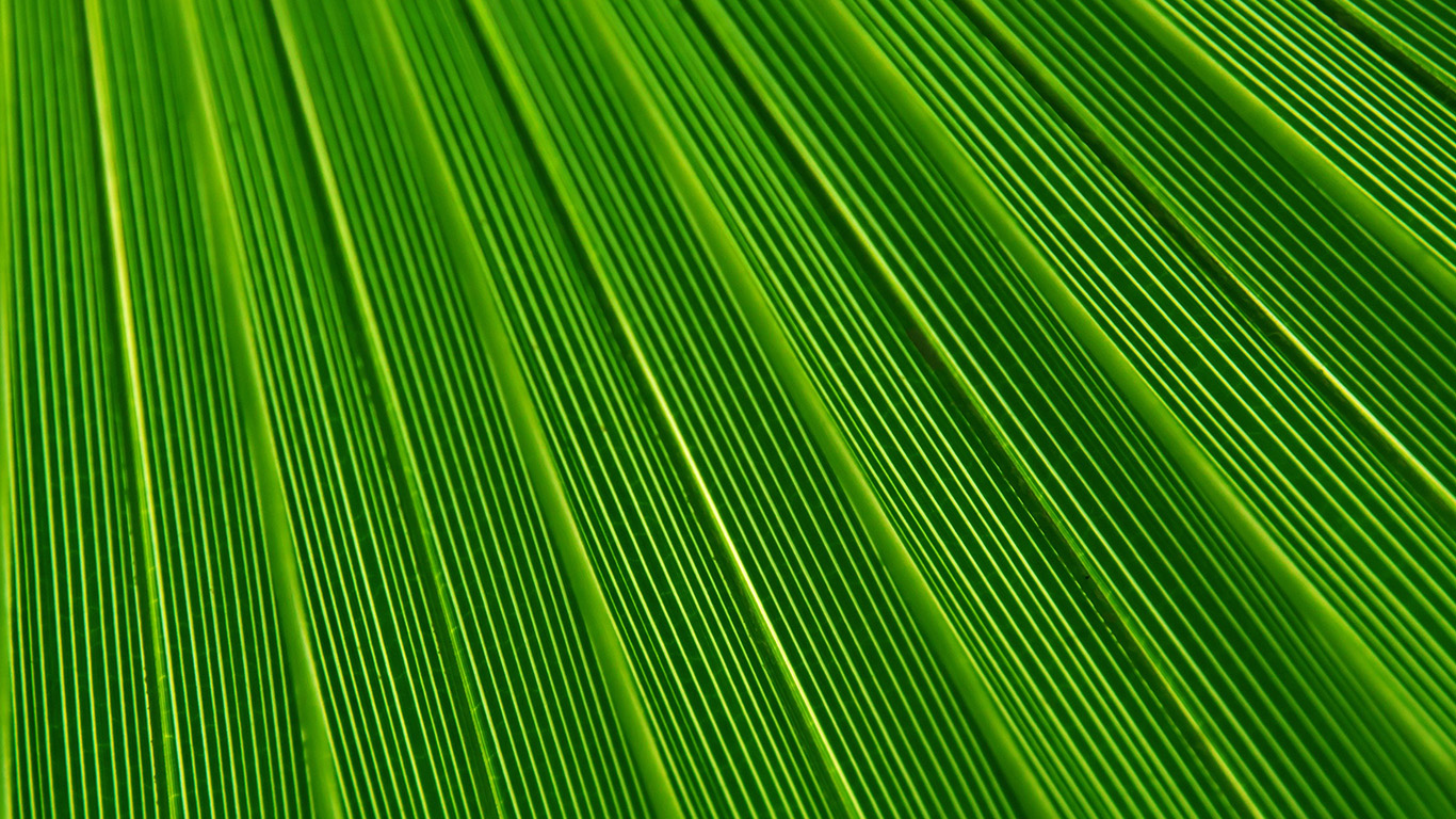 desktop-wallpaper-laptop-mac-macbook-air-vn29-leaf-green-surface-texture-nature-pattern-wallpaper