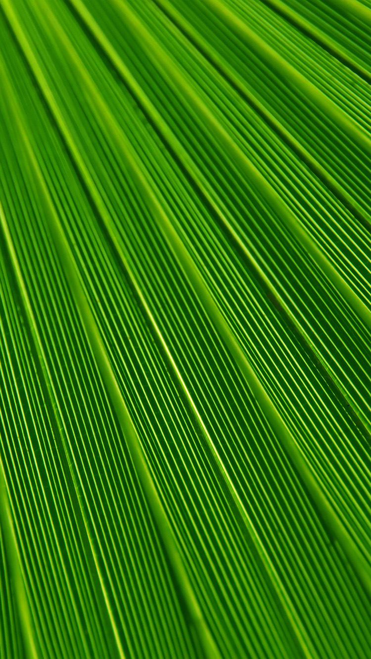 iPhone6papers.co-Apple-iPhone-6-iphone6-plus-wallpaper-vn29-leaf-green-surface-texture-nature-pattern