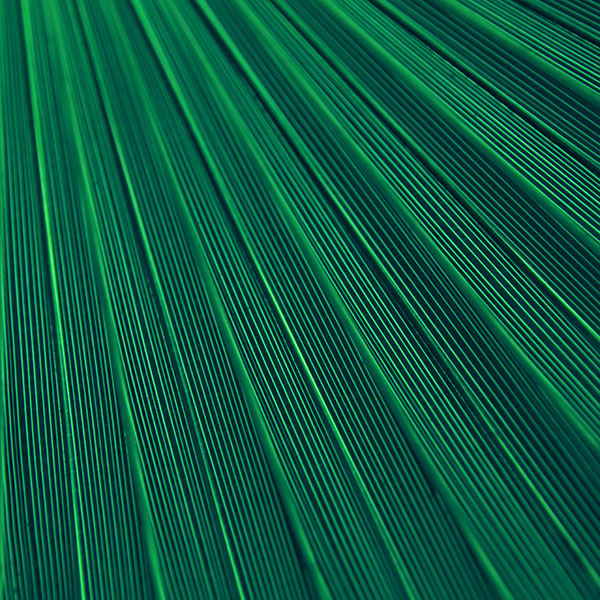 iPapers.co-Apple-iPhone-iPad-Macbook-iMac-wallpaper-vn30-leaf-green-blue-surface-texture-nature-pattern-wallpaper