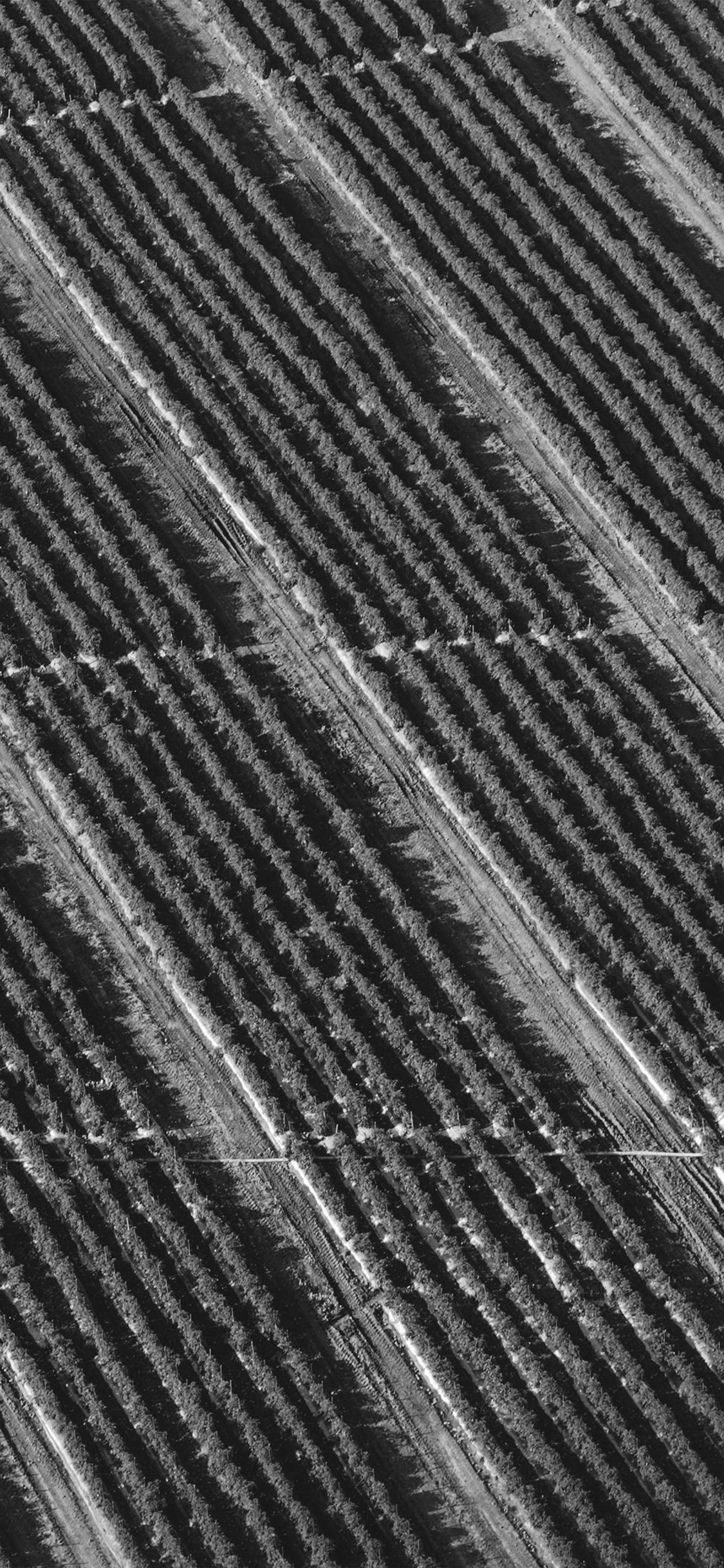 iPhoneXpapers.com-Apple-iPhone-wallpaper-vn62-bw-dark-field-nature-pattern