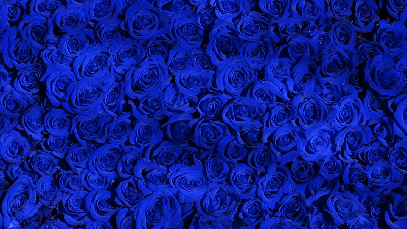 Wallpaper For Desktop Laptop Vo44 Rose Blue Pattern