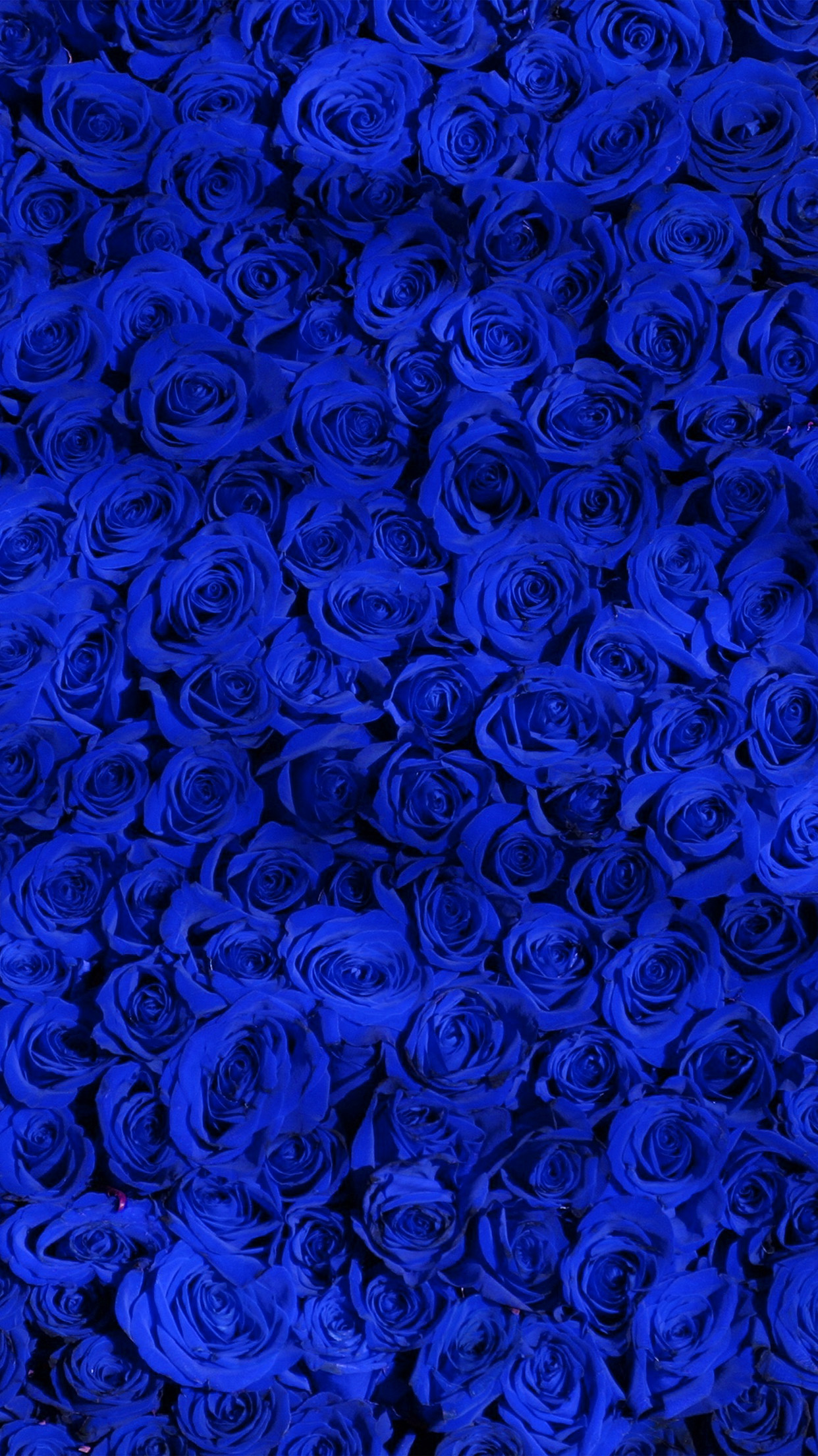 | vo44-rose-blue-pattern