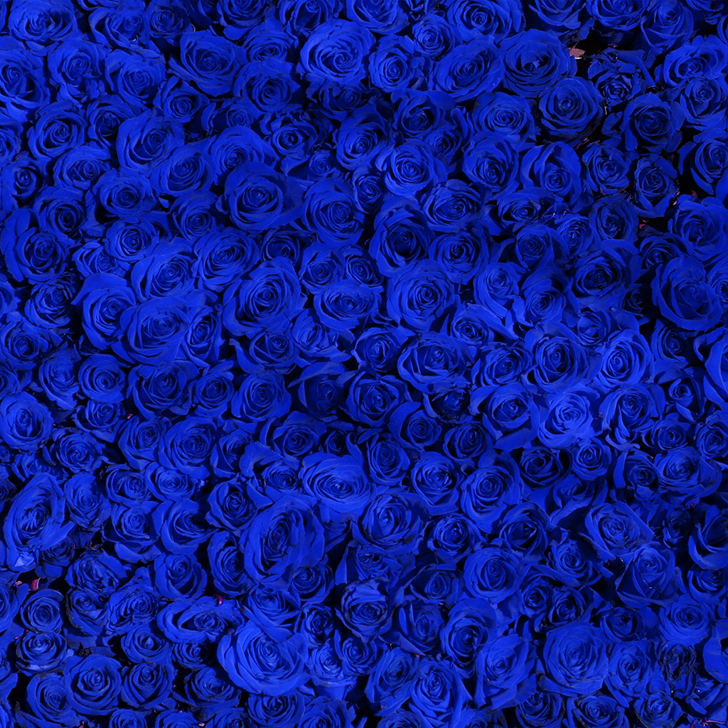 android-wallpaper-vo44-rose-blue-pattern-wallpaper