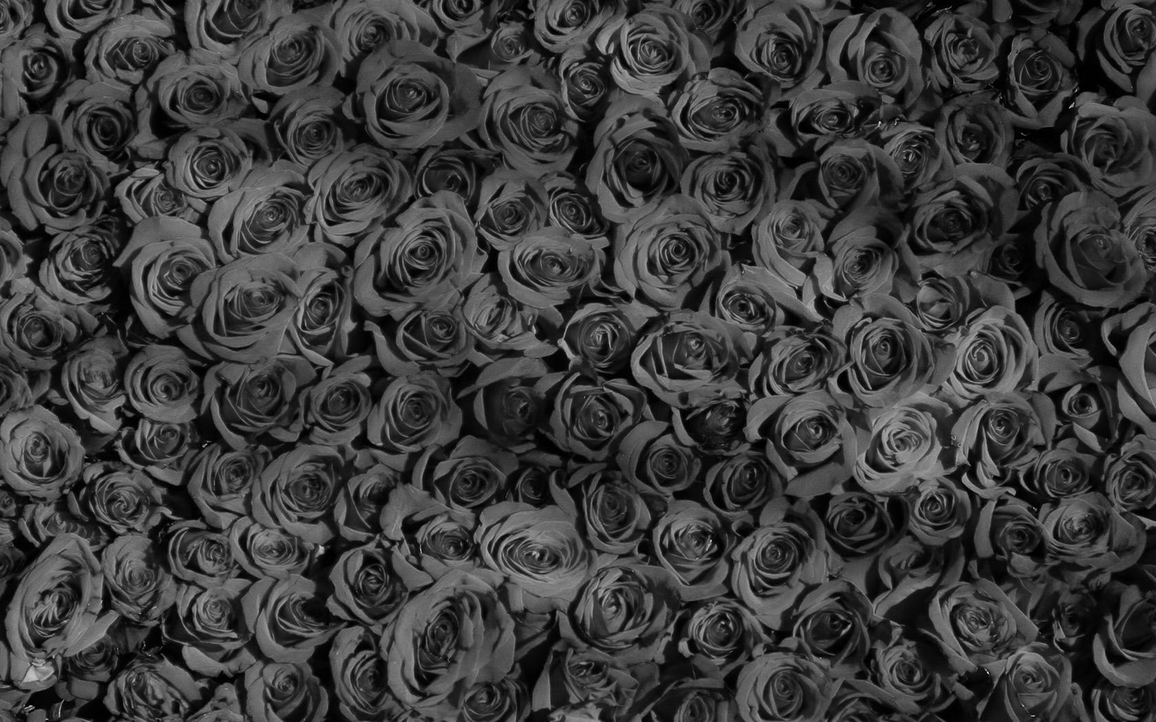 vo45-rose-dark-bw-pattern-wallpaper