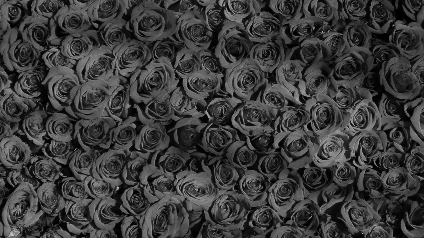 Wallpaper For Laptop Rose