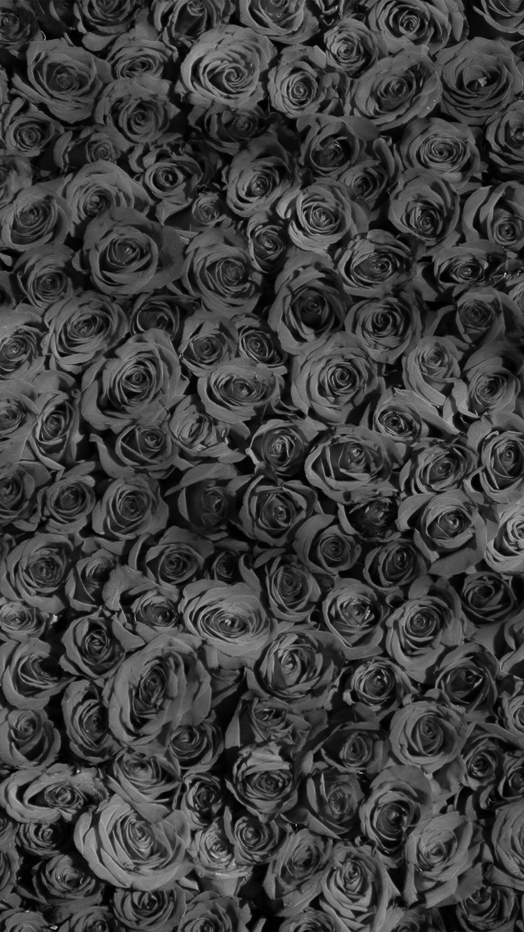 iPhone6papers.co-Apple-iPhone-6-iphone6-plus-wallpaper-vo45-rose-dark-bw-pattern