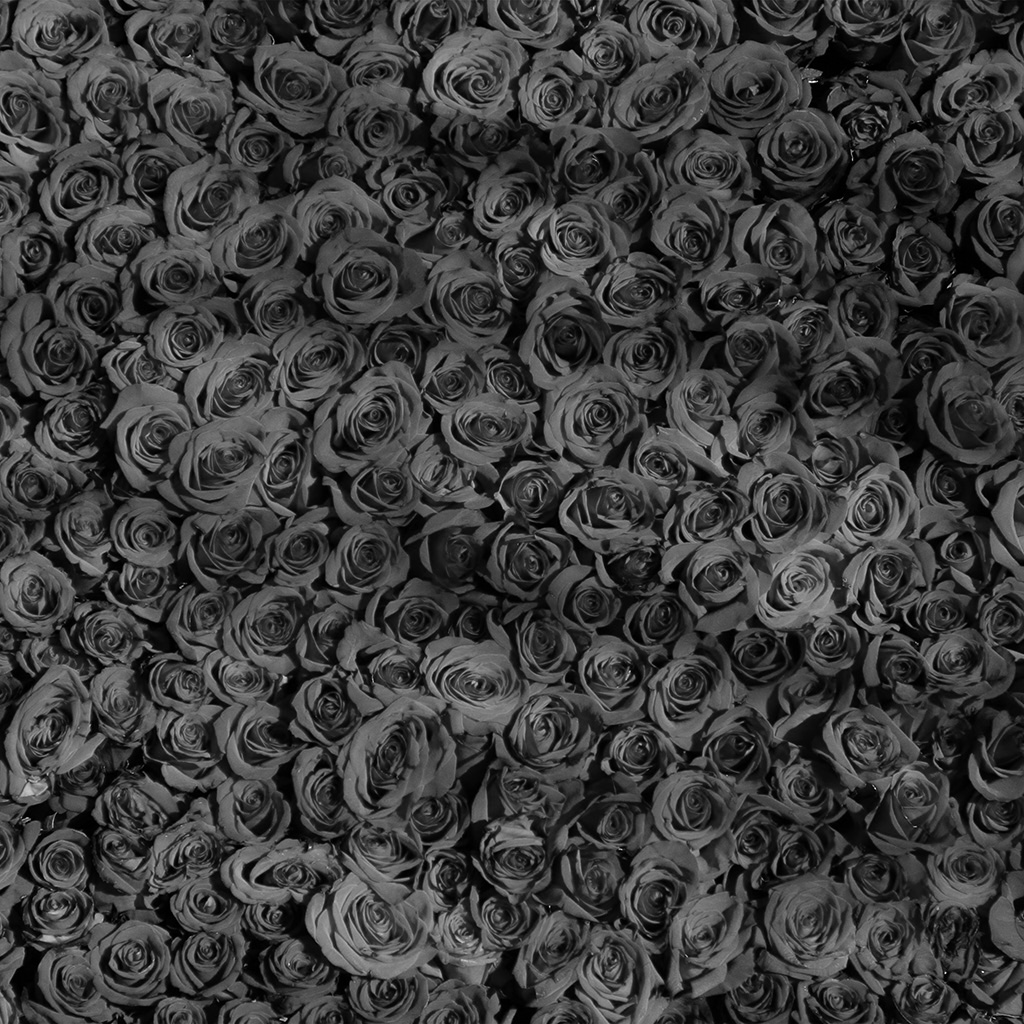 wallpaper-vo45-rose-dark-bw-pattern-wallpaper