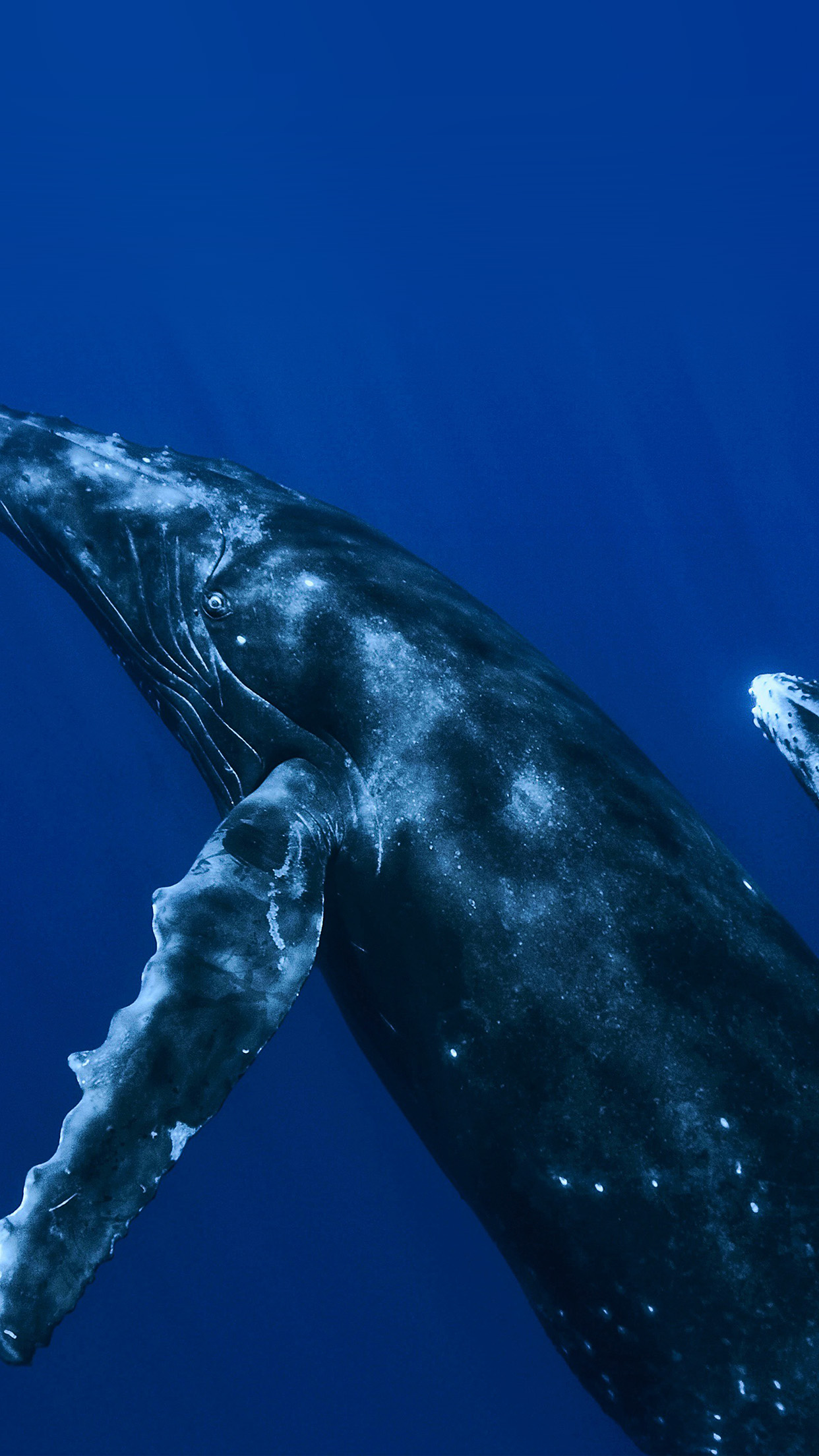 Iphone wallpaper vo62 whale blue art nature - Classic art wallpaper iphone 5 ...
