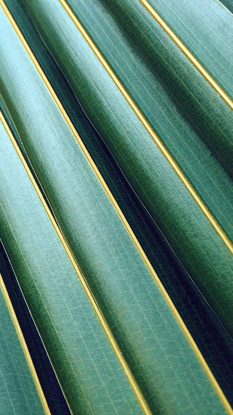 iPhone6papers.co-Apple-iPhone-6-iphone6-plus-wallpaper-vq75-leaf-green-line-nature-pattern-blue
