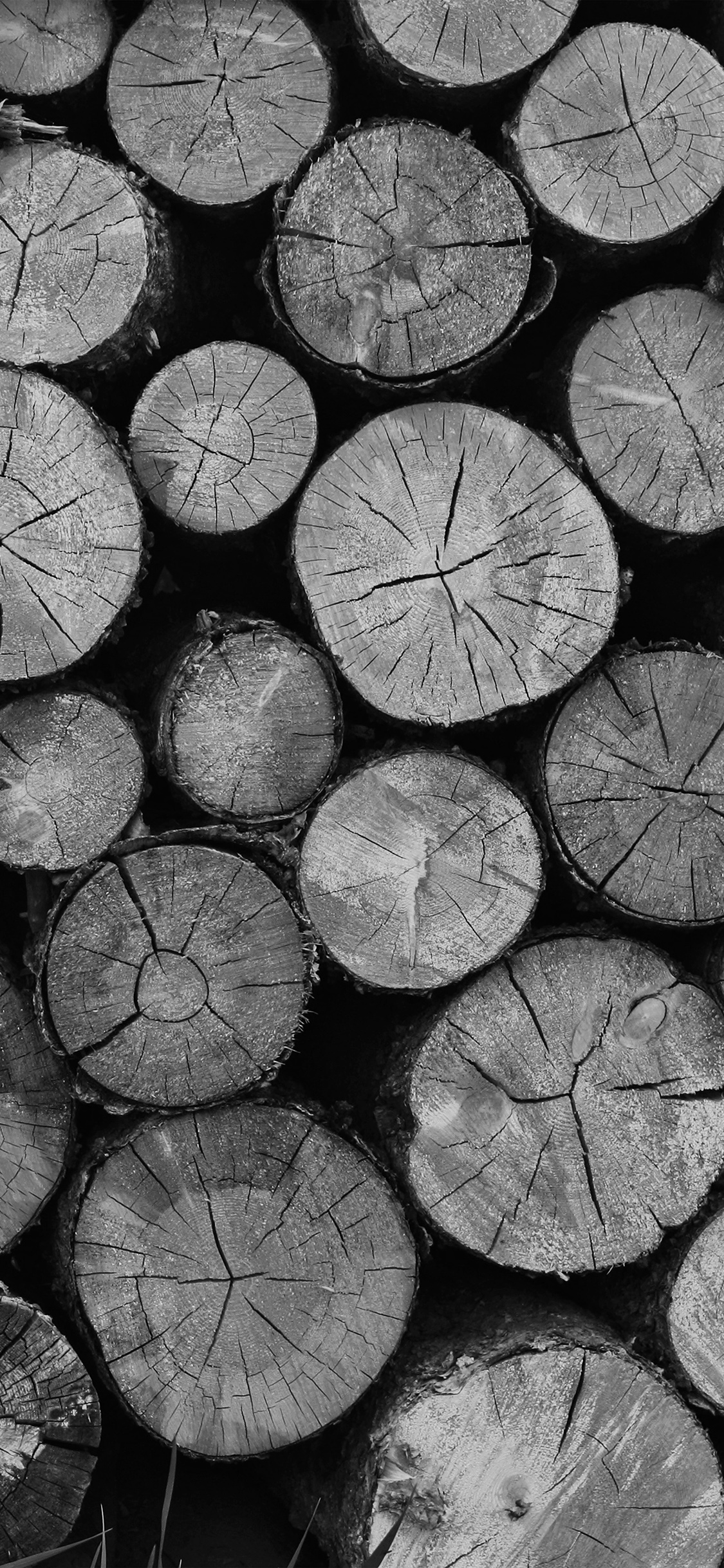 iPhoneXpapers.com-Apple-iPhone-wallpaper-vr11-wood-nature-cut-pattern-dark-bw
