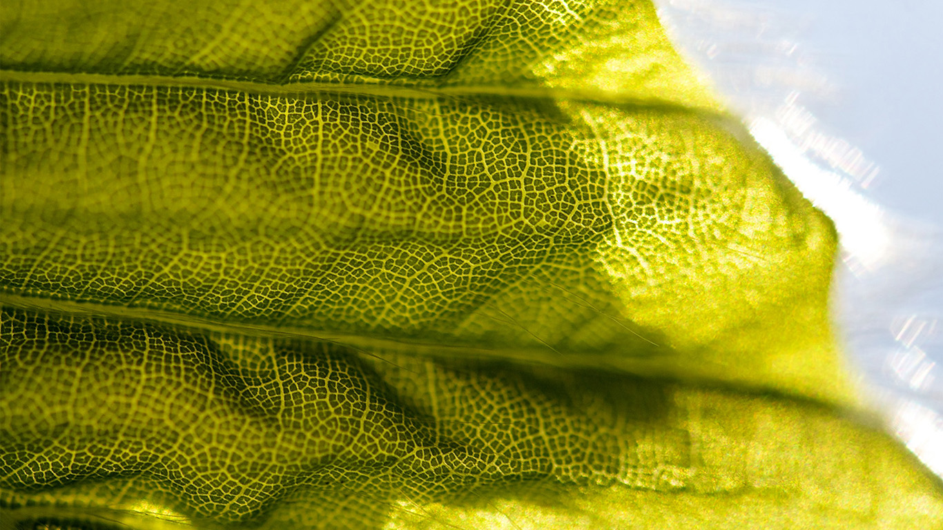 desktop-wallpaper-laptop-mac-macbook-air-vr92-lifelines-leaf-flower-pattern-green-wallpaper