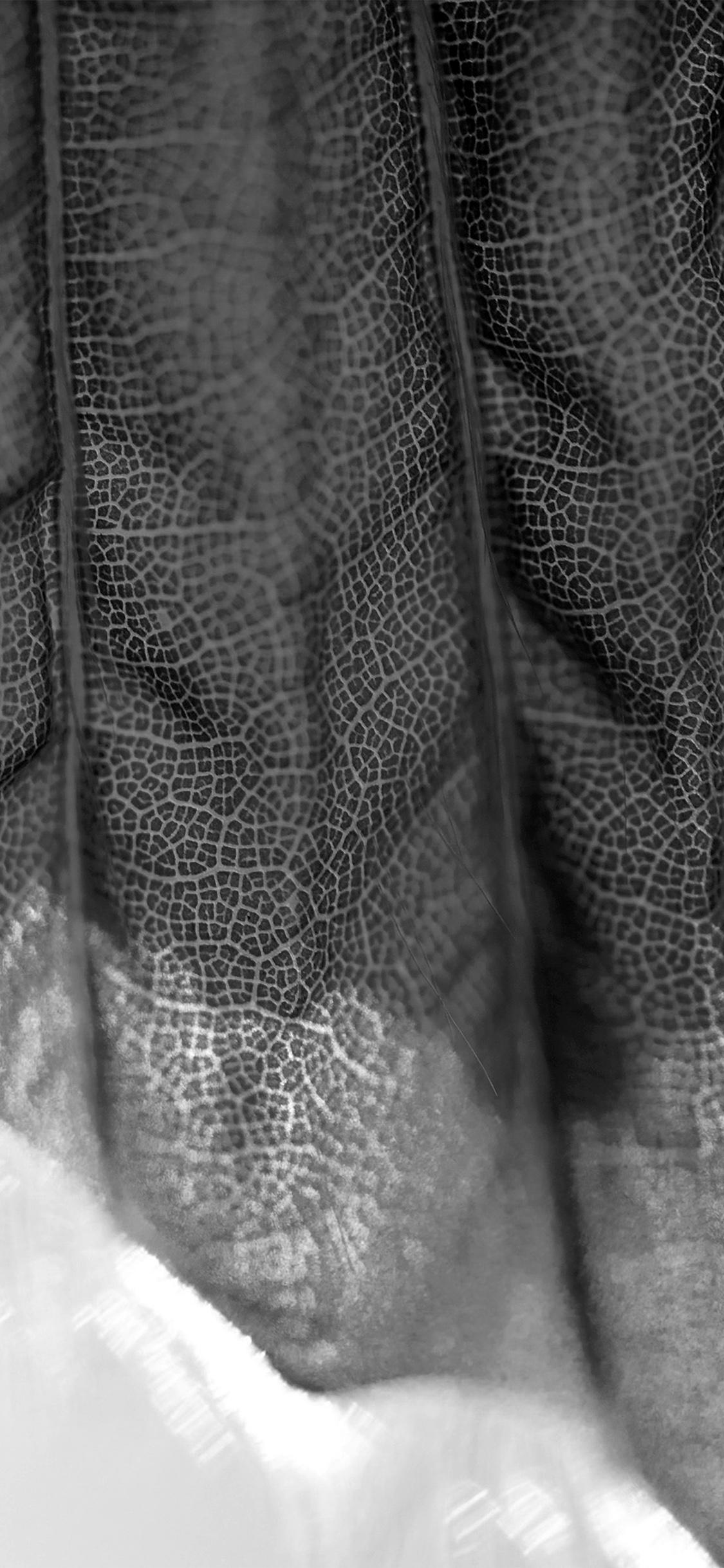 iPhoneXpapers.com-Apple-iPhone-wallpaper-vr94-lifelines-leaf-flower-pattern-dark-bw-nature