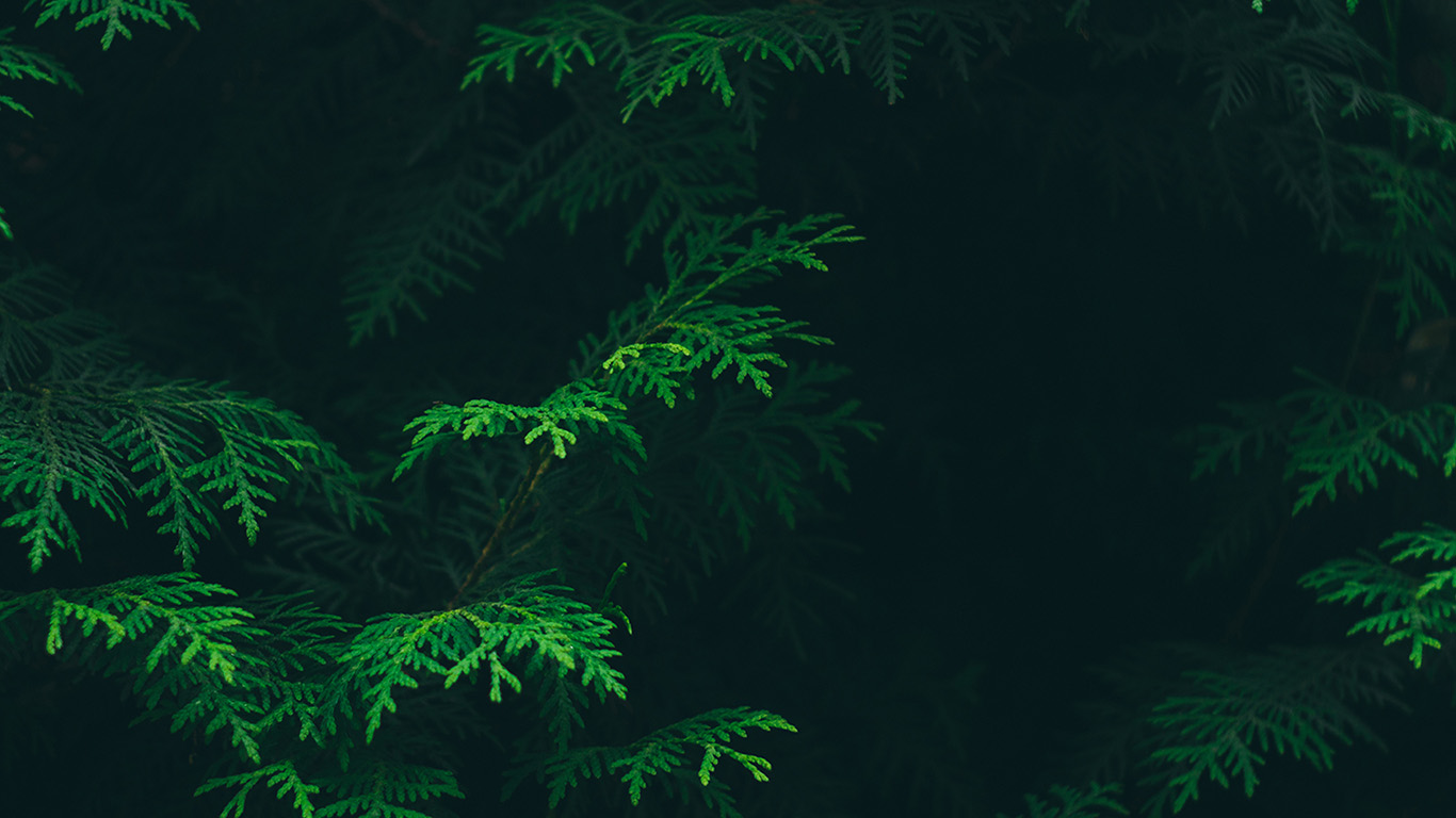 desktop-wallpaper-laptop-mac-macbook-air-vs88-tree-leaf-green-pattern-nature-wallpaper