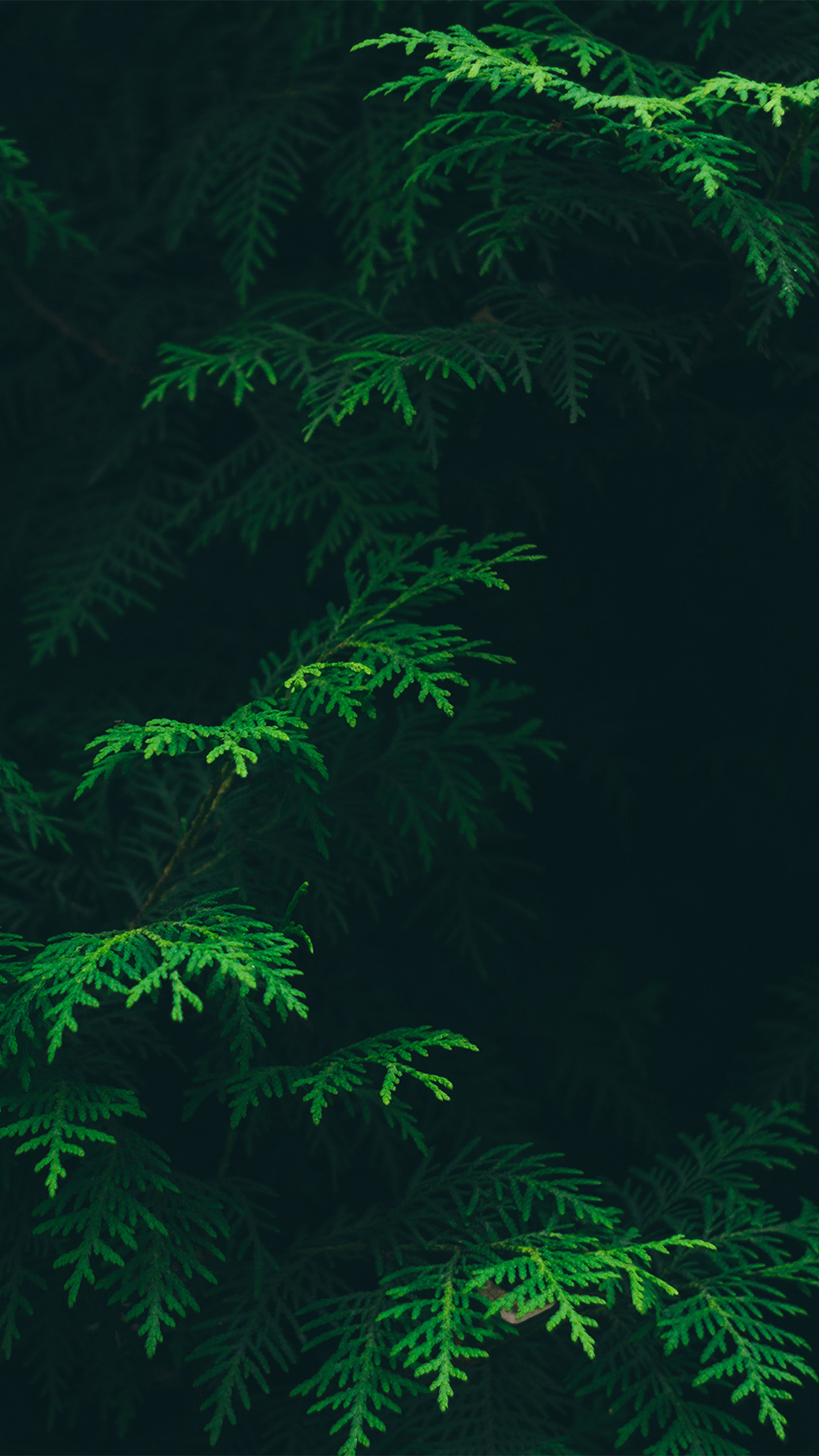 For iphone x iphonexpapers - Pine tree wallpaper iphone ...