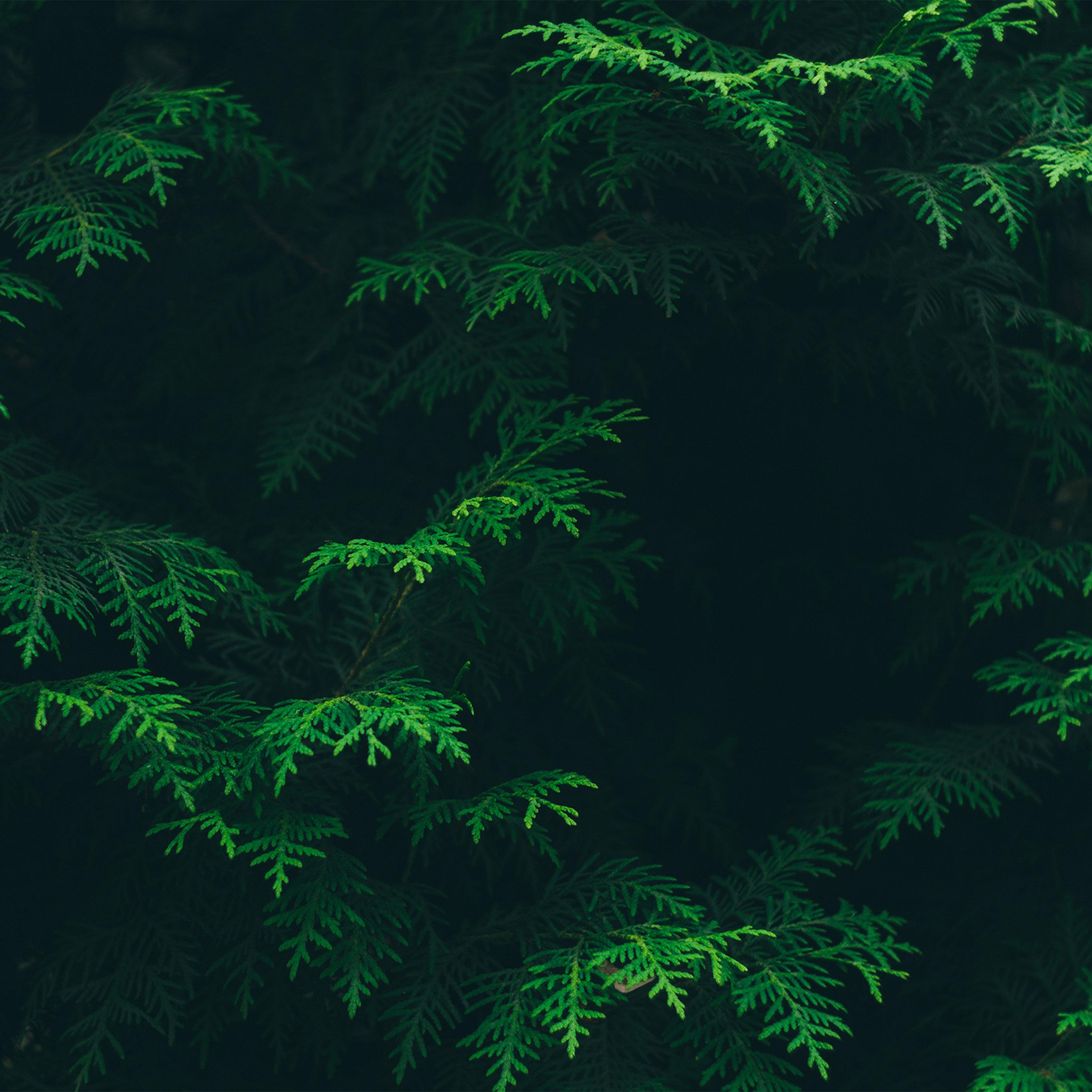 Vs88 Tree Leaf Green Pattern Nature Wallpaper