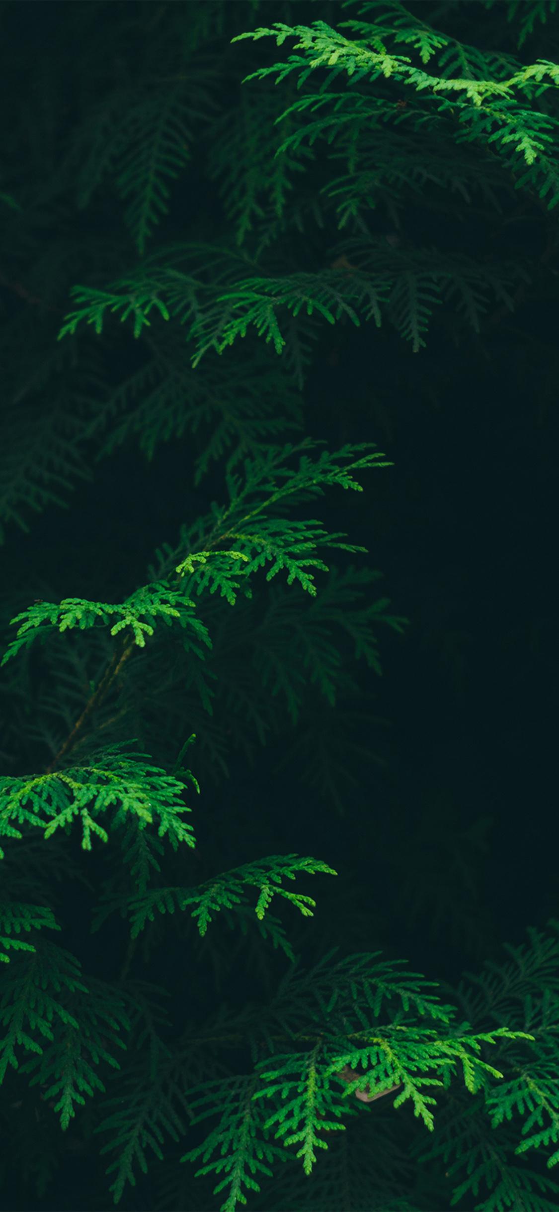 iPhoneXpapers.com-Apple-iPhone-wallpaper-vs88-tree-leaf-green-pattern-nature