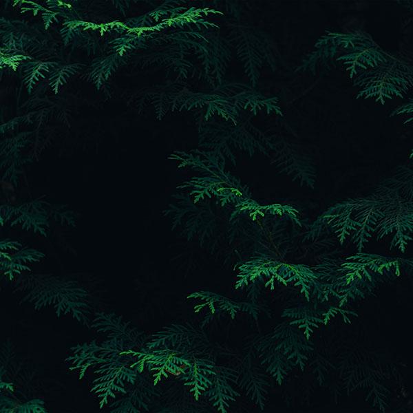 iPapers.co-Apple-iPhone-iPad-Macbook-iMac-wallpaper-vs89-tree-leaf-green-pattern-nature-dark-wallpaper