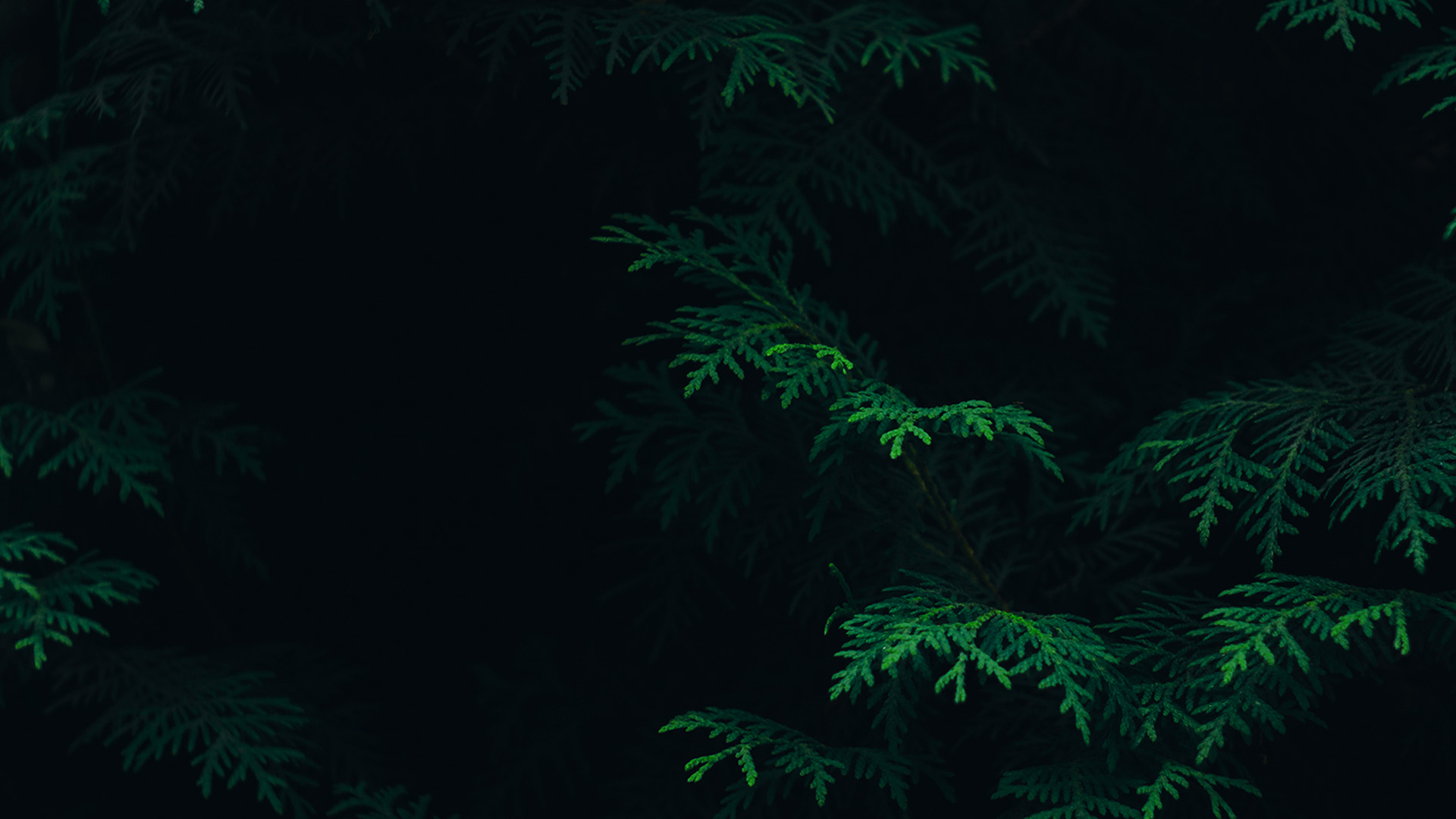 Dark Green Nature Wallpapers Mobile: 2560 X 1600