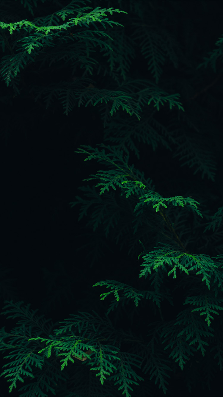 iPhone6papers.co-Apple-iPhone-6-iphone6-plus-wallpaper-vs89-tree-leaf-green-pattern-nature-dark