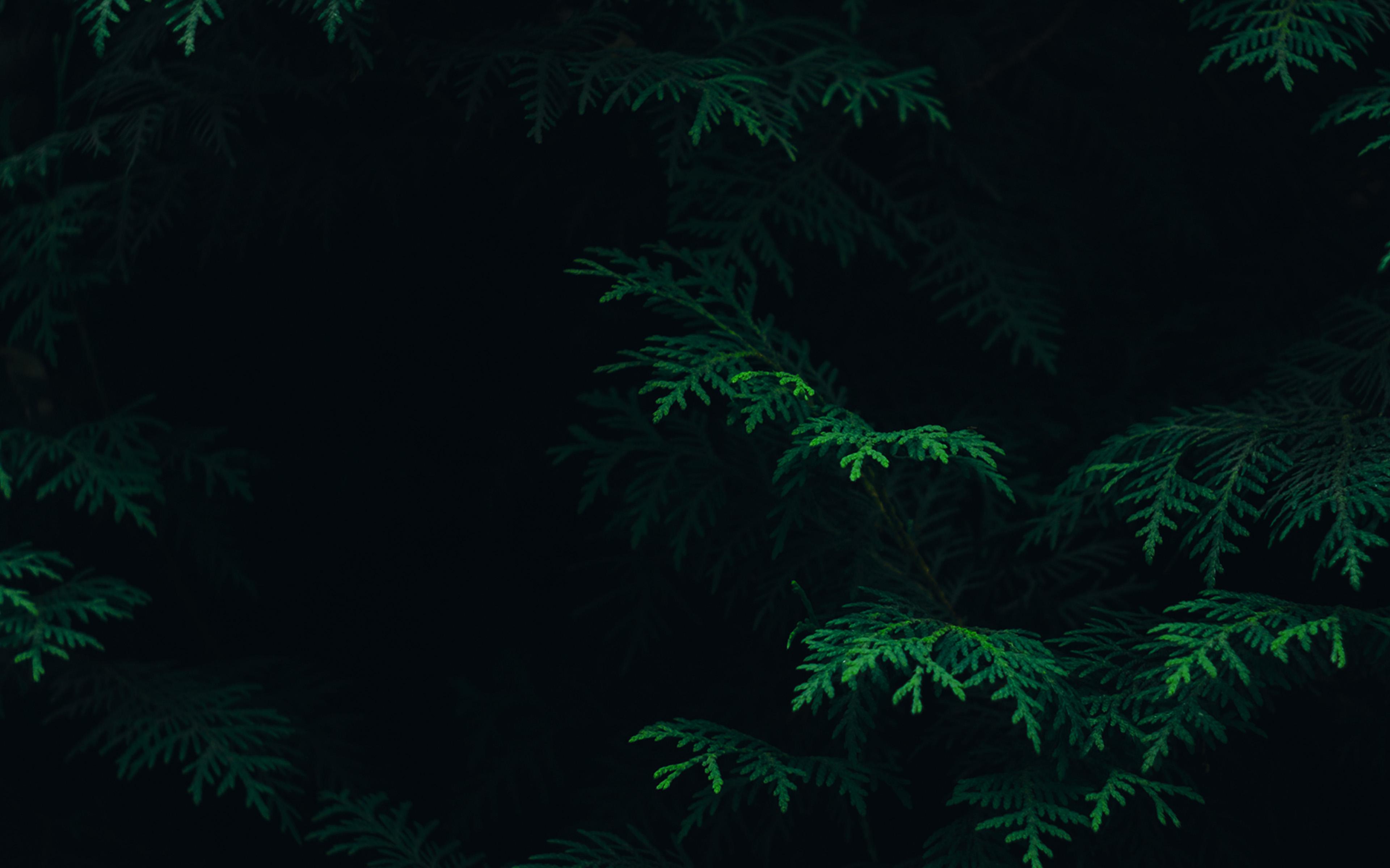 Dark 4k Nature Wallpaper