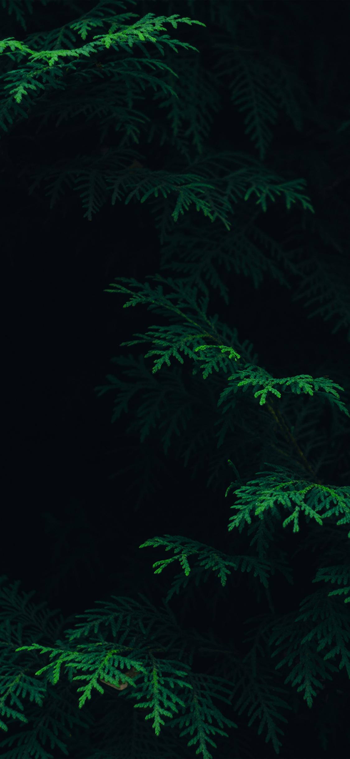 Vs89 Tree Leaf Green Pattern Nature Dark Wallpaper