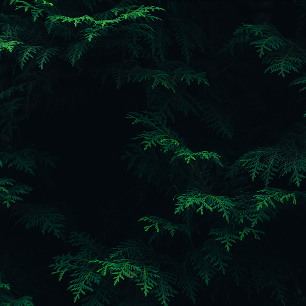 wallpaper-vs89-tree-leaf-green-pattern-nature-dark-wallpaper