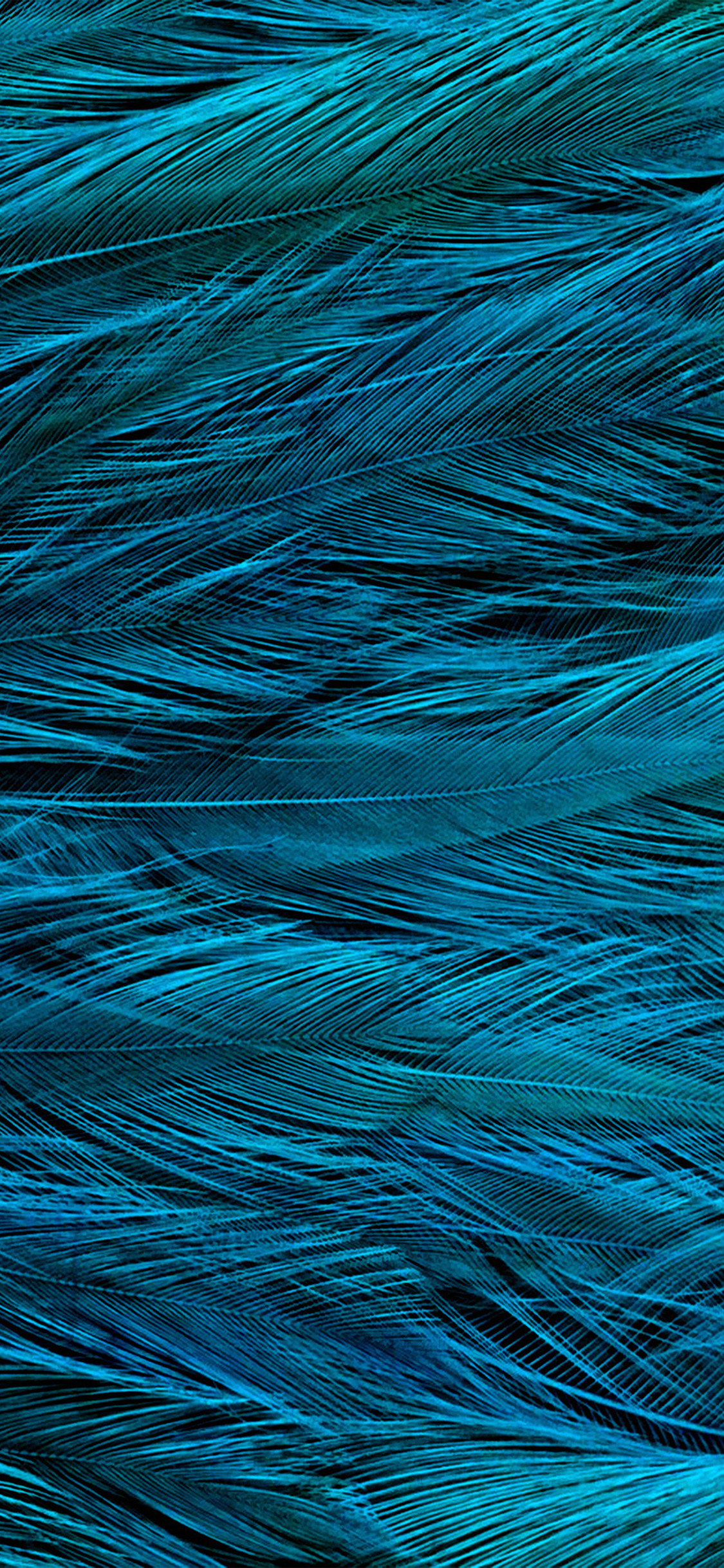 iPhoneXpapers.com-Apple-iPhone-wallpaper-vt31-feather-blue-bird-texture-pattern