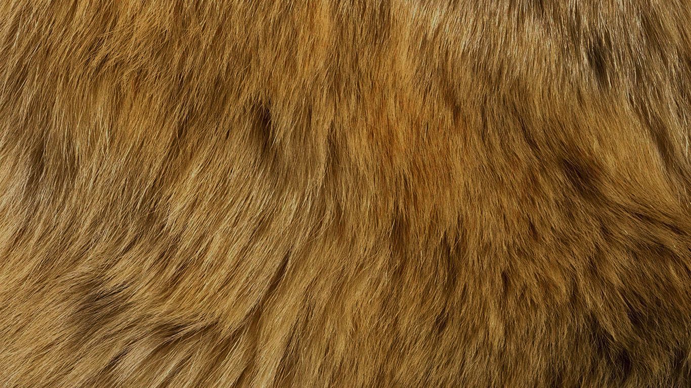 desktop-wallpaper-laptop-mac-macbook-air-vt37-texture-fur-dog-orange-pattern-gold-wallpaper