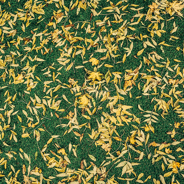 iPapers.co-Apple-iPhone-iPad-Macbook-iMac-wallpaper-vu55-leaf-lawn-nature-green-pattern-wallpaper