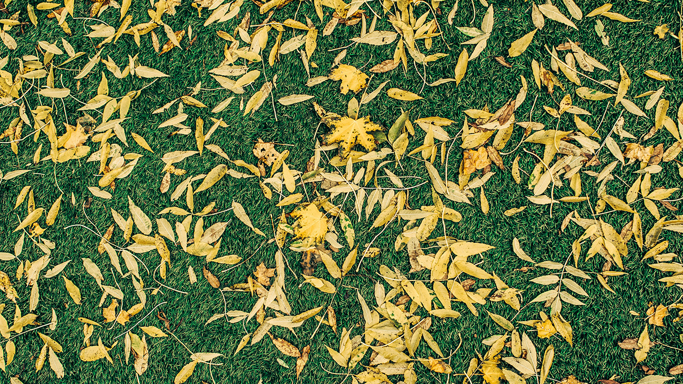 desktop-wallpaper-laptop-mac-macbook-air-vu55-leaf-lawn-nature-green-pattern-wallpaper